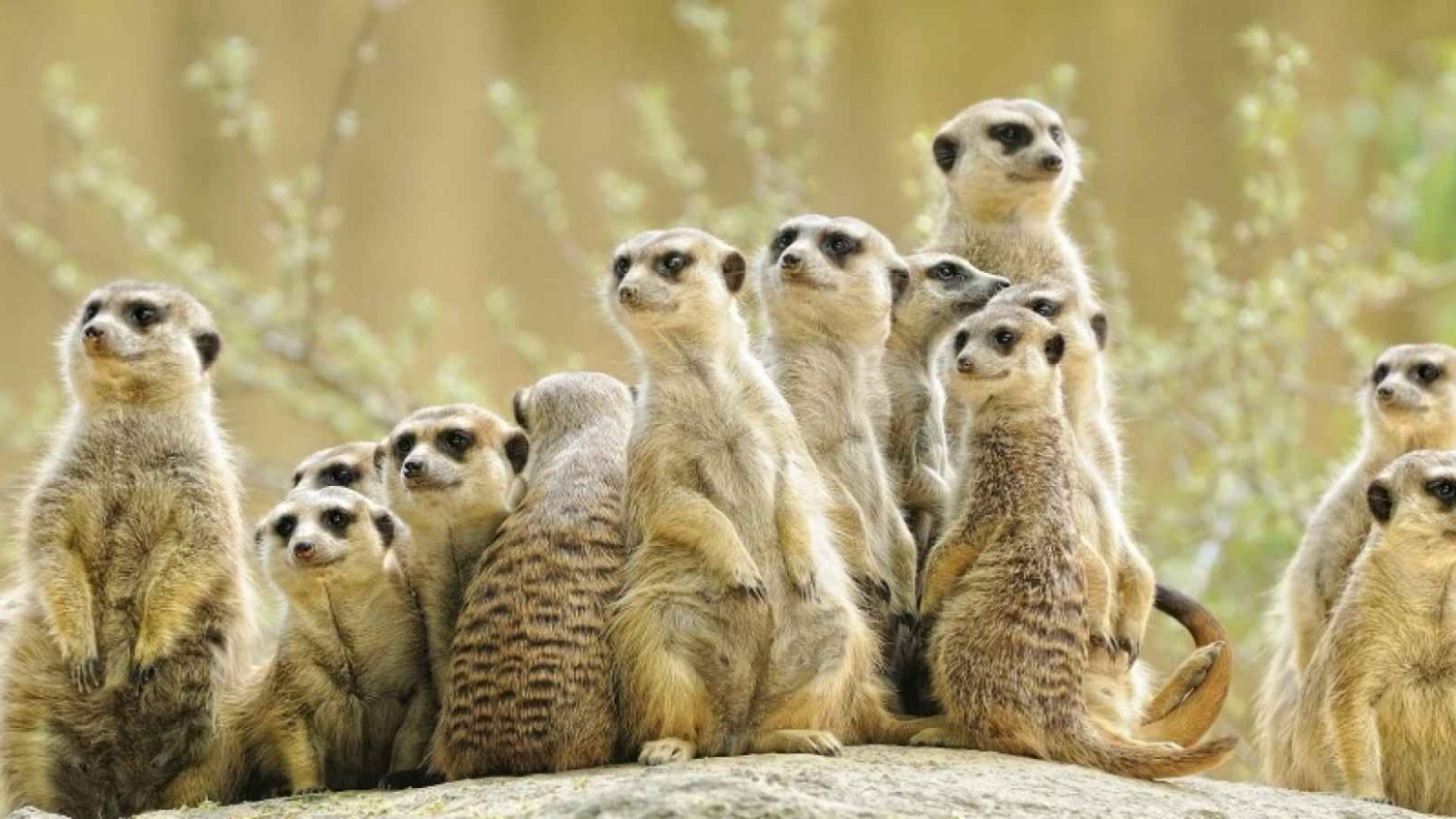 Why Meerkat Stood Out From the Others at SxSW