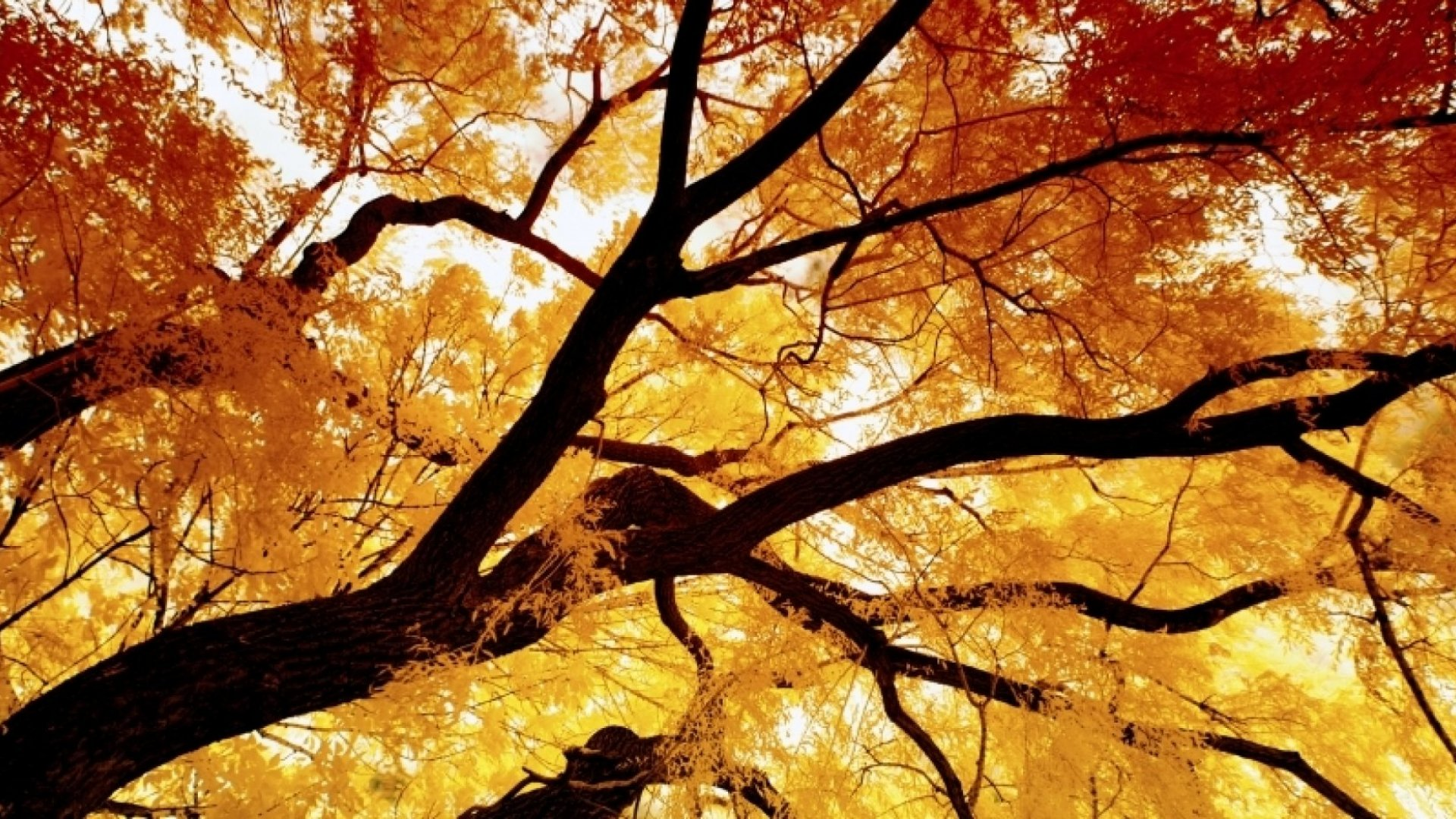 5 Surprising Ways Autumn Will Affect Your Workplace Performance