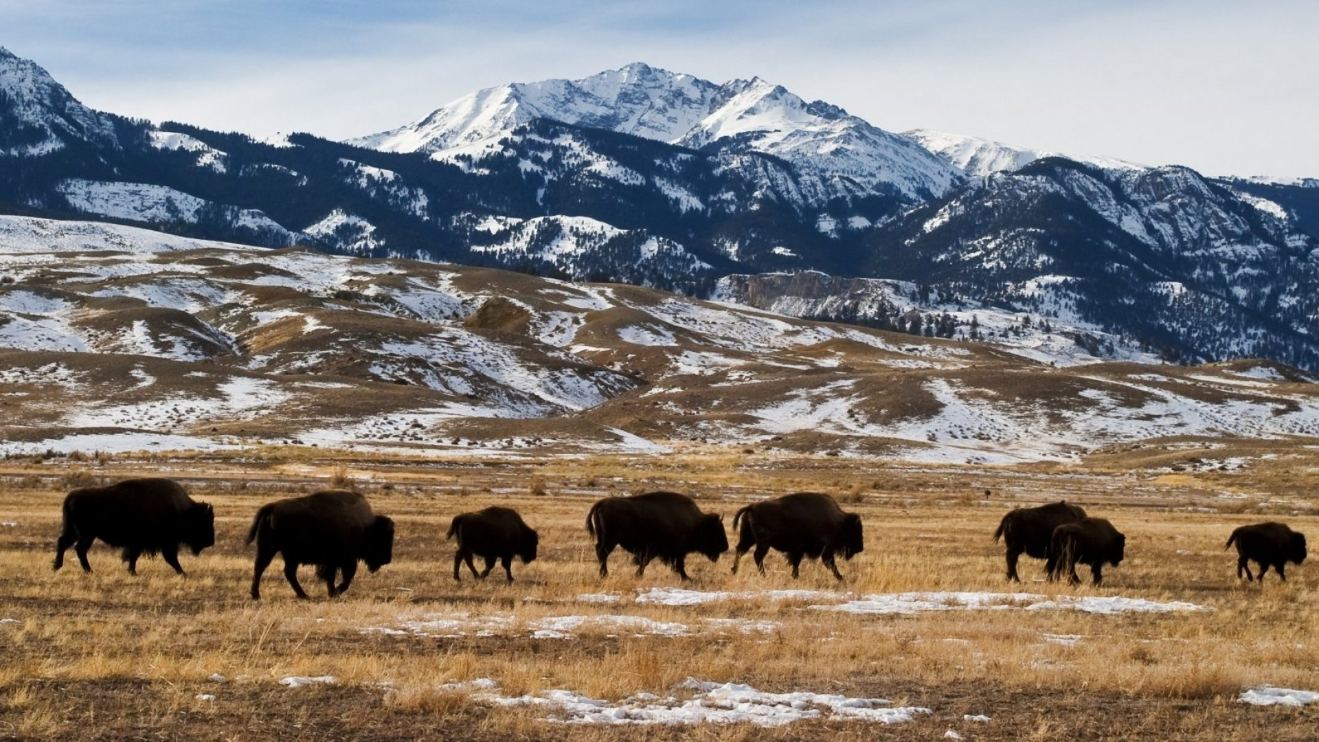 Why the Bitcoin Gold Rush Is Moving to Montana