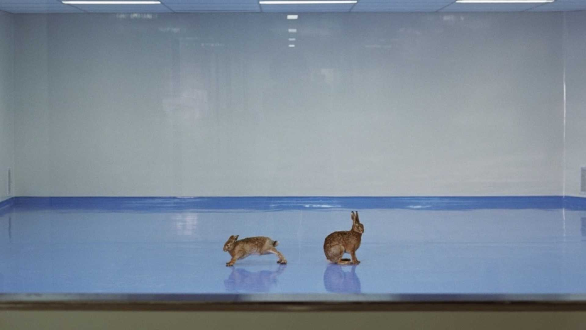 Need Help Focusing? Think About 2 Rabbits
