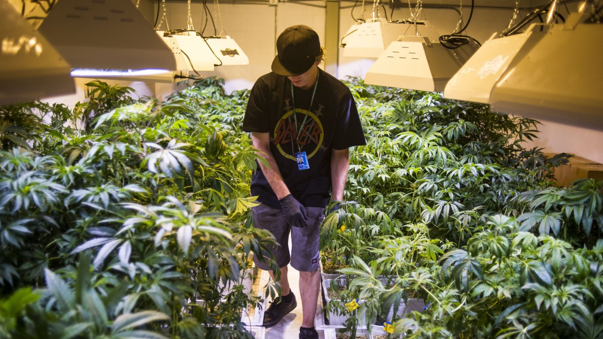 Colorado has built a billion-dollar industry in regulating the marijuana industry