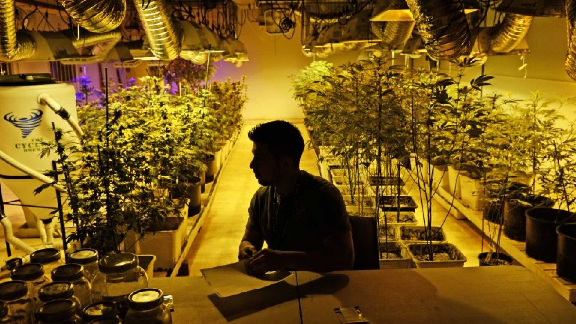 Legal Marijuana Blooms Into the Fastest-Growing Industry in America