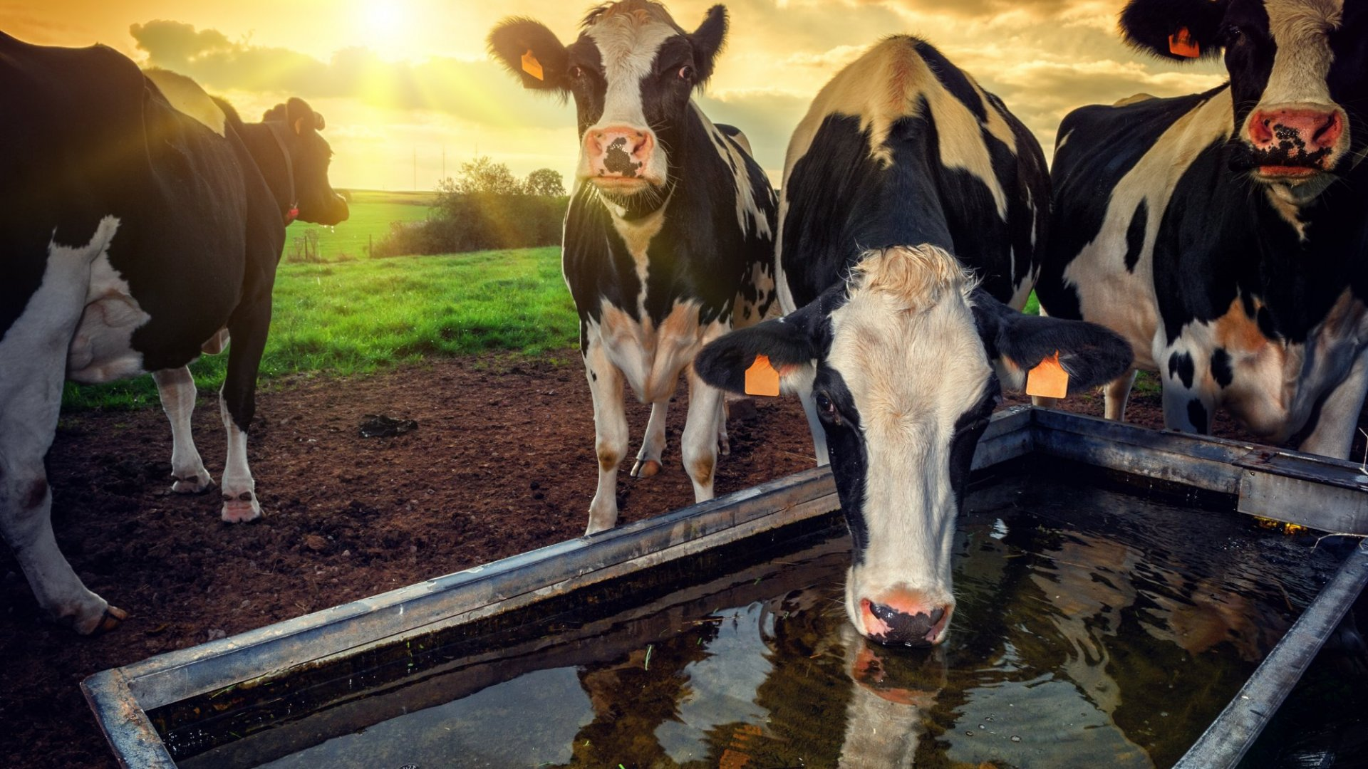 Blockchain may be making its way to those who focus on livestock to survive.
