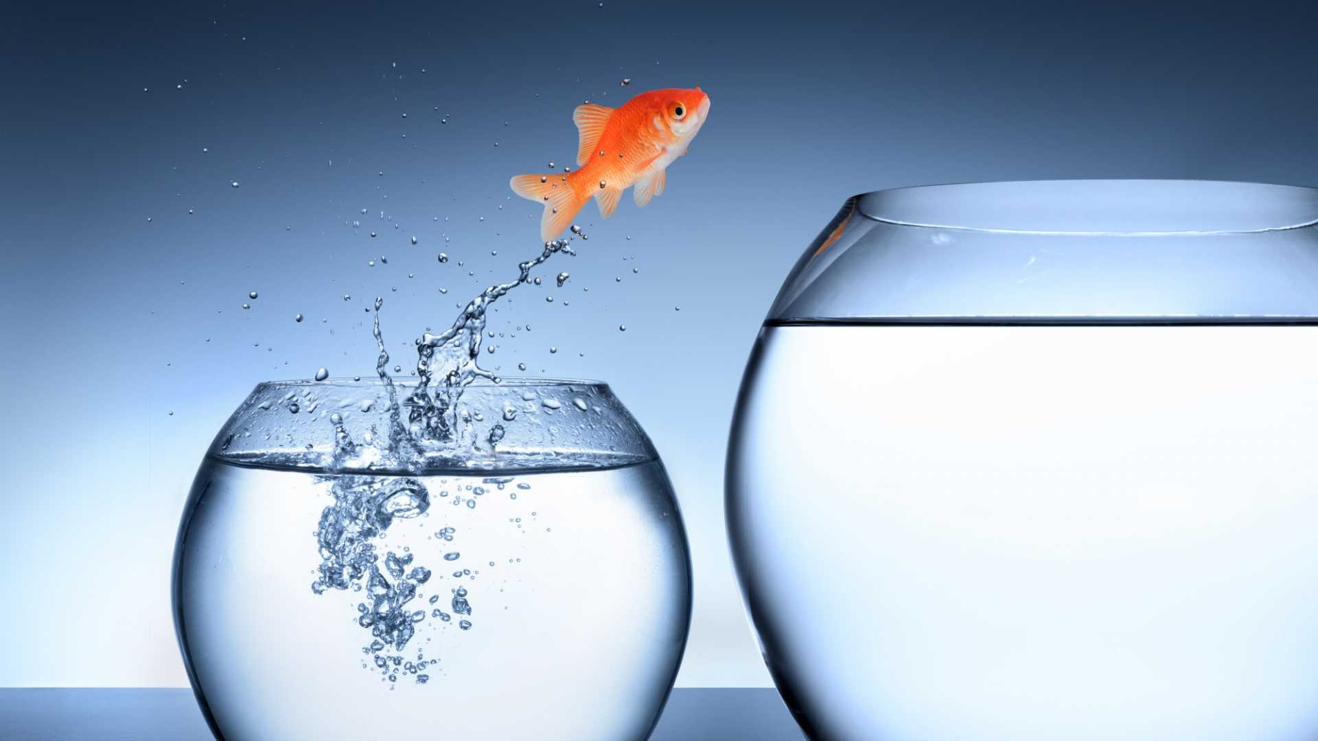 Why the Status Quo Is the Enemy of Smart Businesspeople