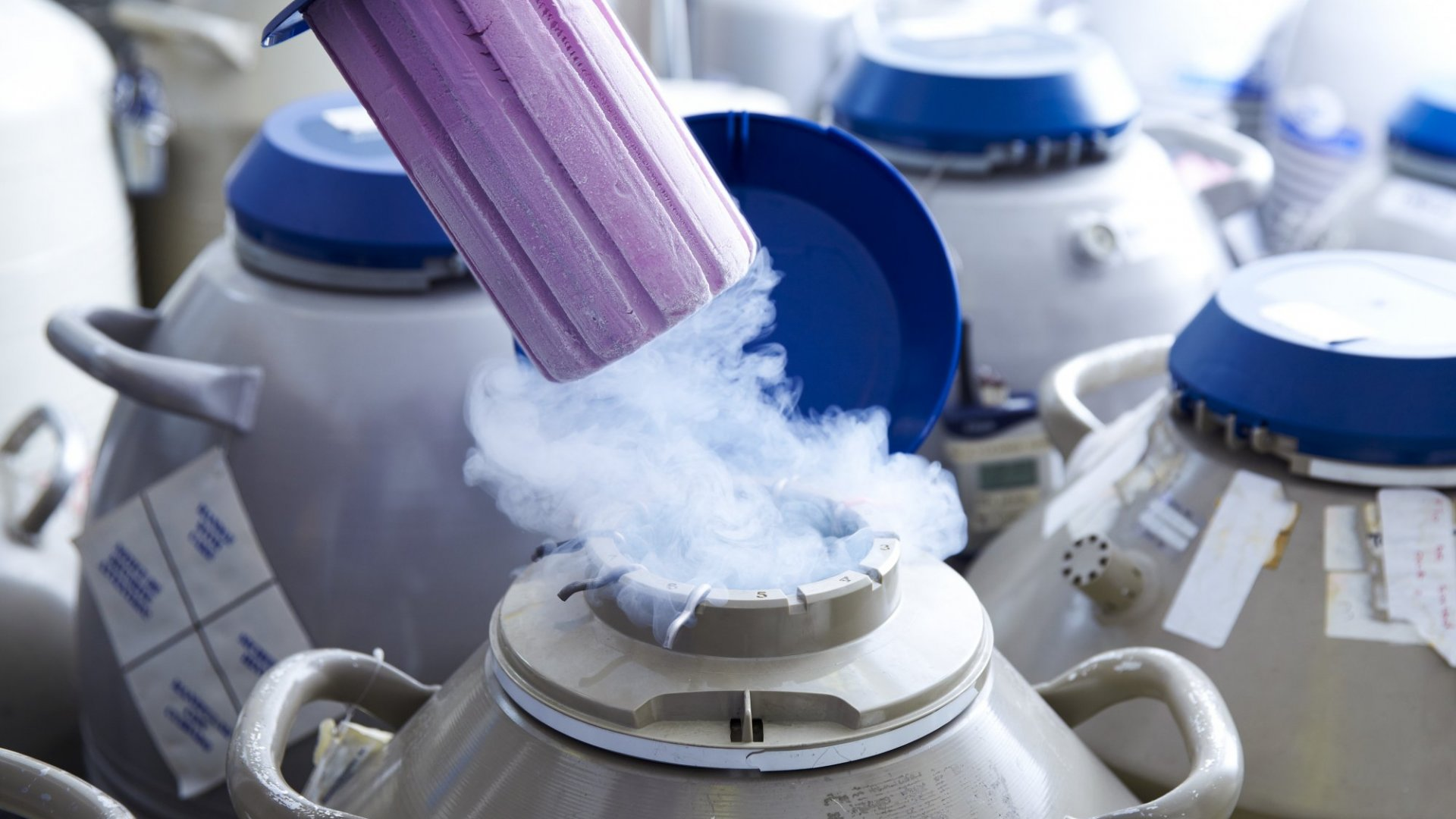 Want to Keep Your Employees? Try Freezing Their Eggs