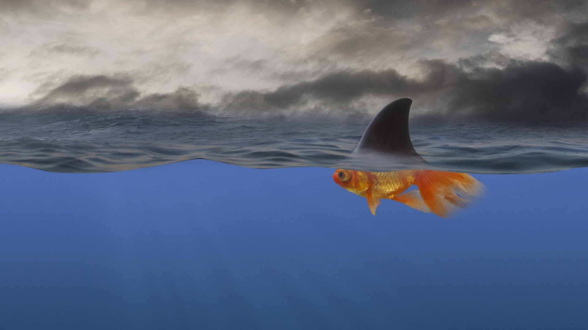 How Swimming With Sharks Can Push Your Business to Profitability