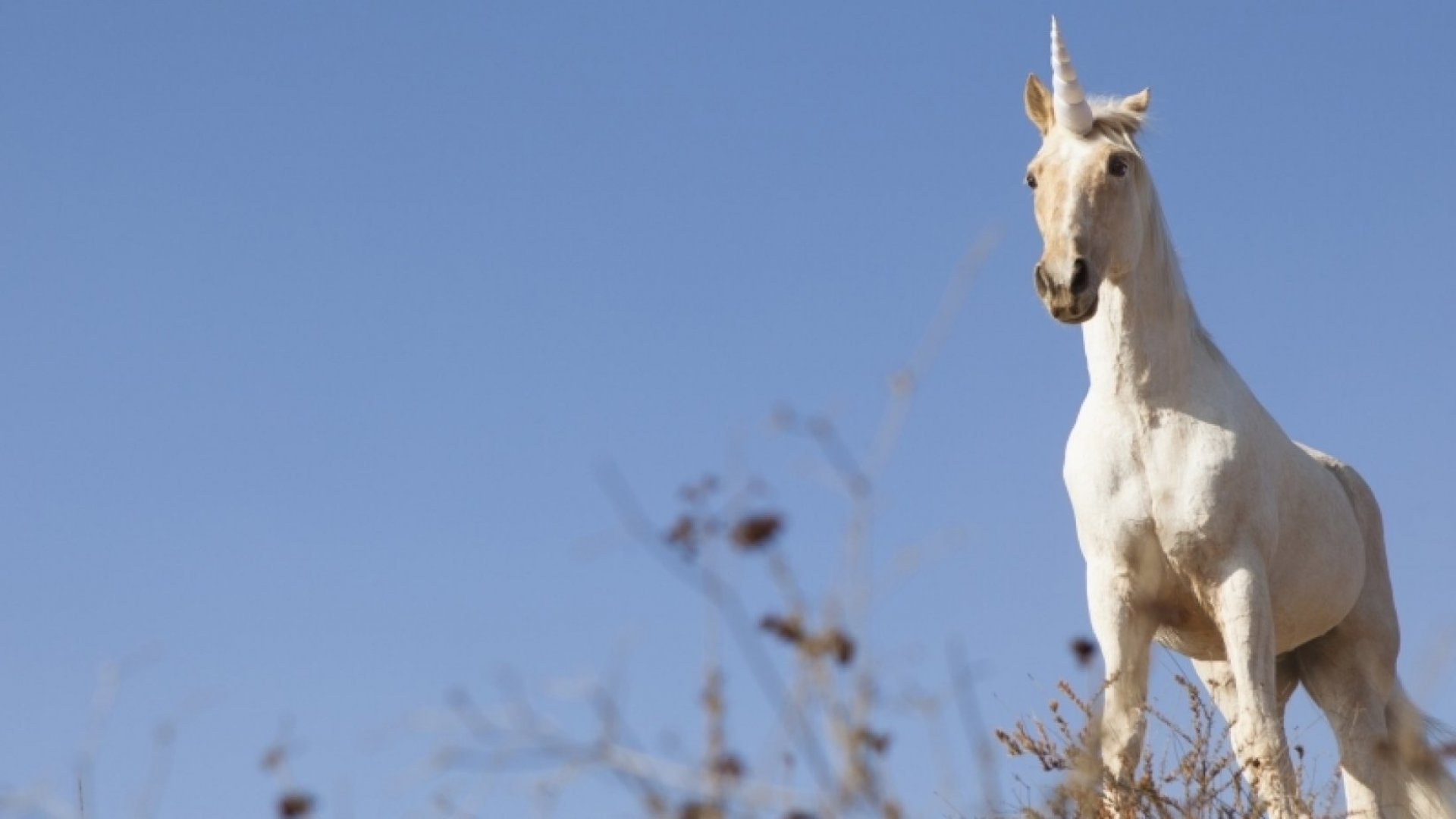 5 Unconventional Productivity Tricks From Unicorn CEOs