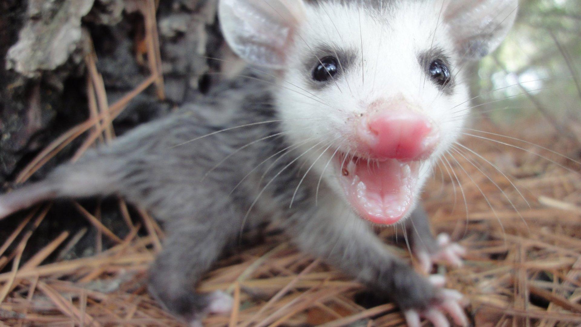 Google's Possum Update, How It Rocked Local SEO Rankings