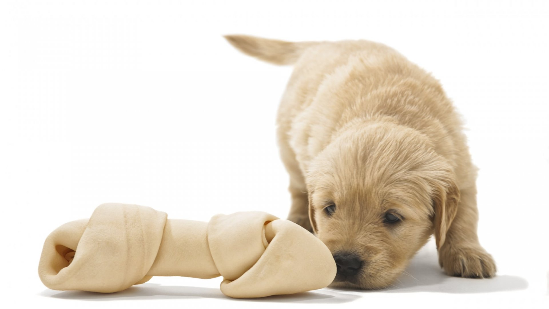 Puppy-Loving CEO Shares Tips for Sniffing Out Authenticity in Business