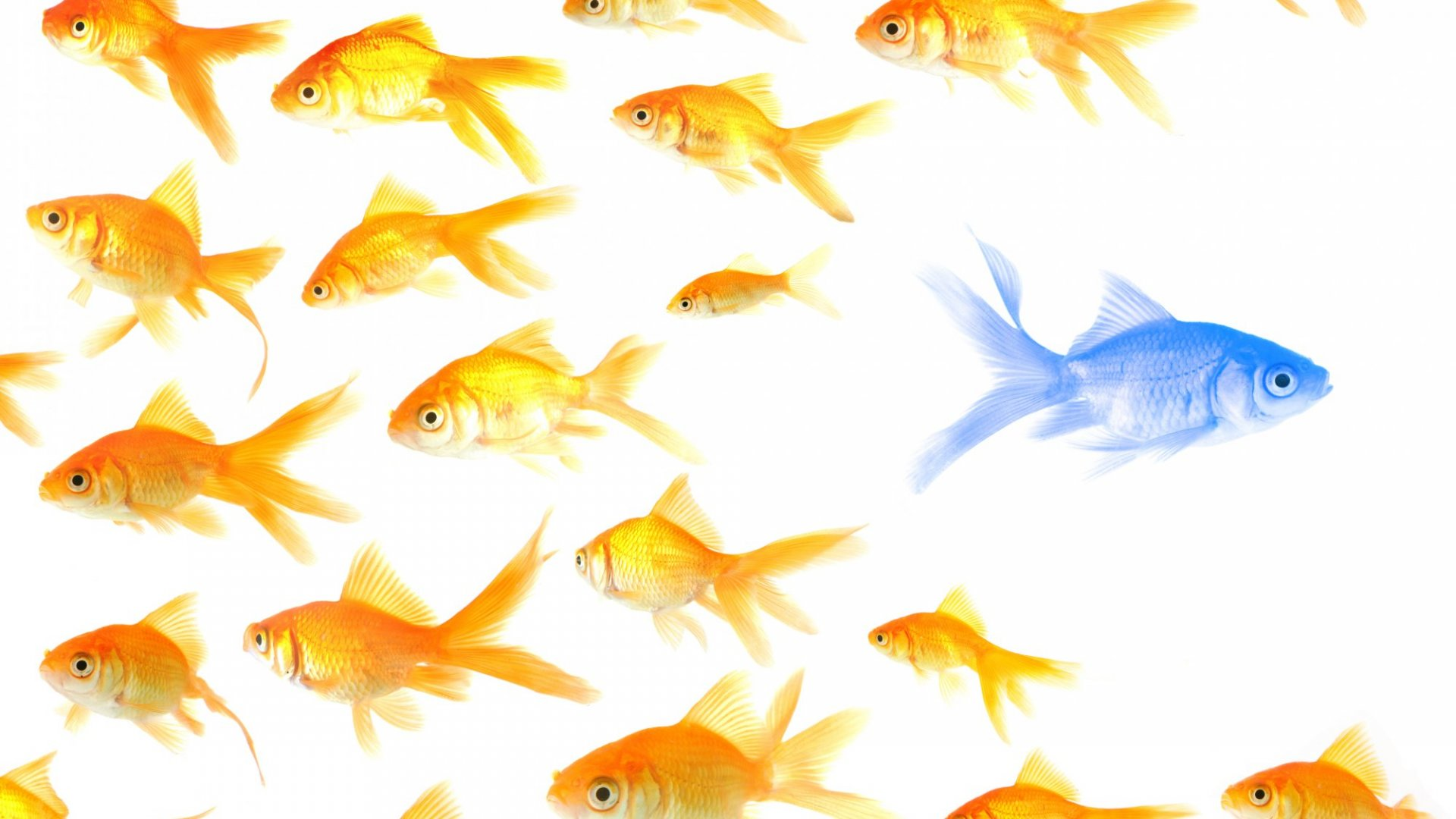5 Ways to Stand Out in a Competitive Industry