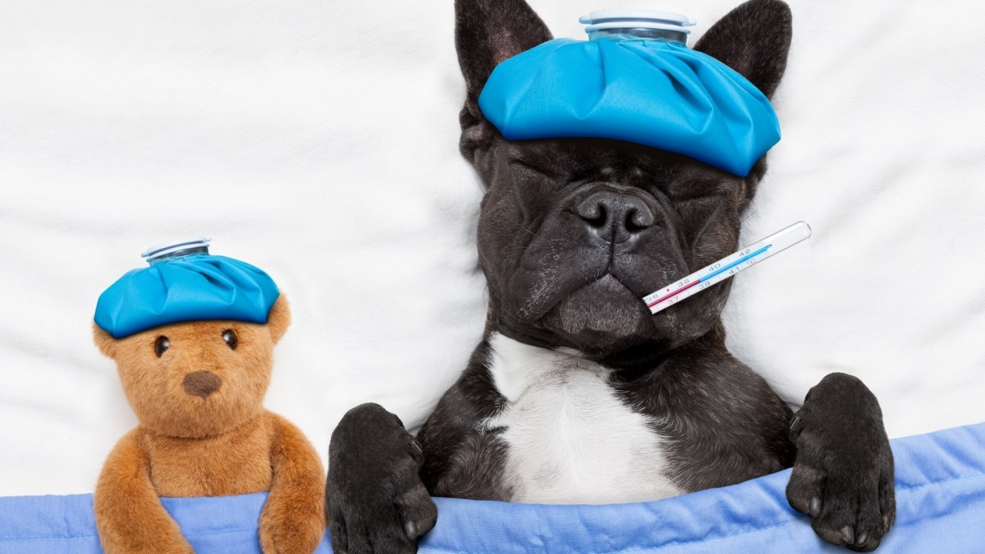 The Flu This Year Is Bad. Here's How to Keep Yourself (and Office) Healthy and Safe