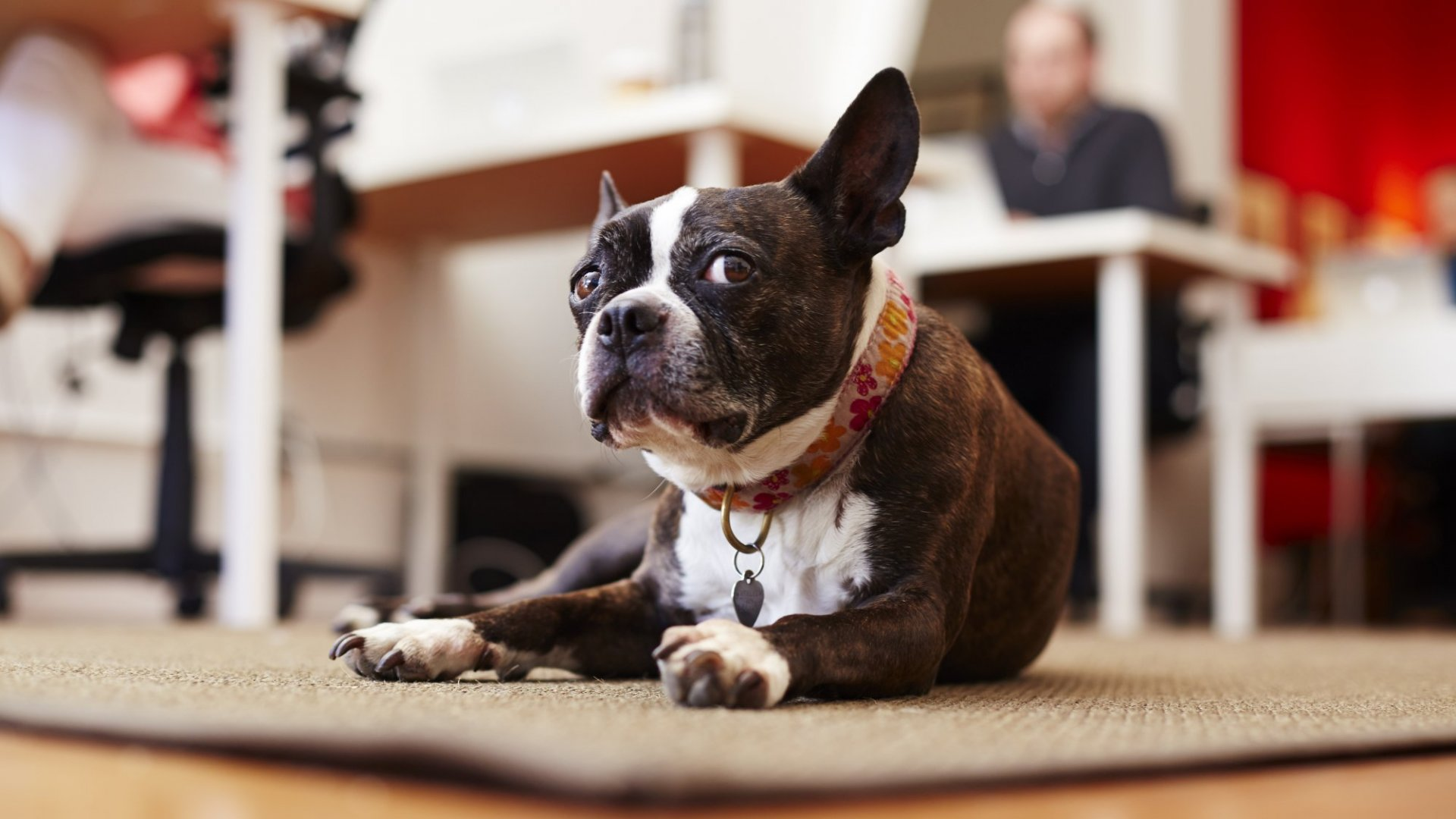 Why I Bring My Dog to Work Every Day (And You Should Too)