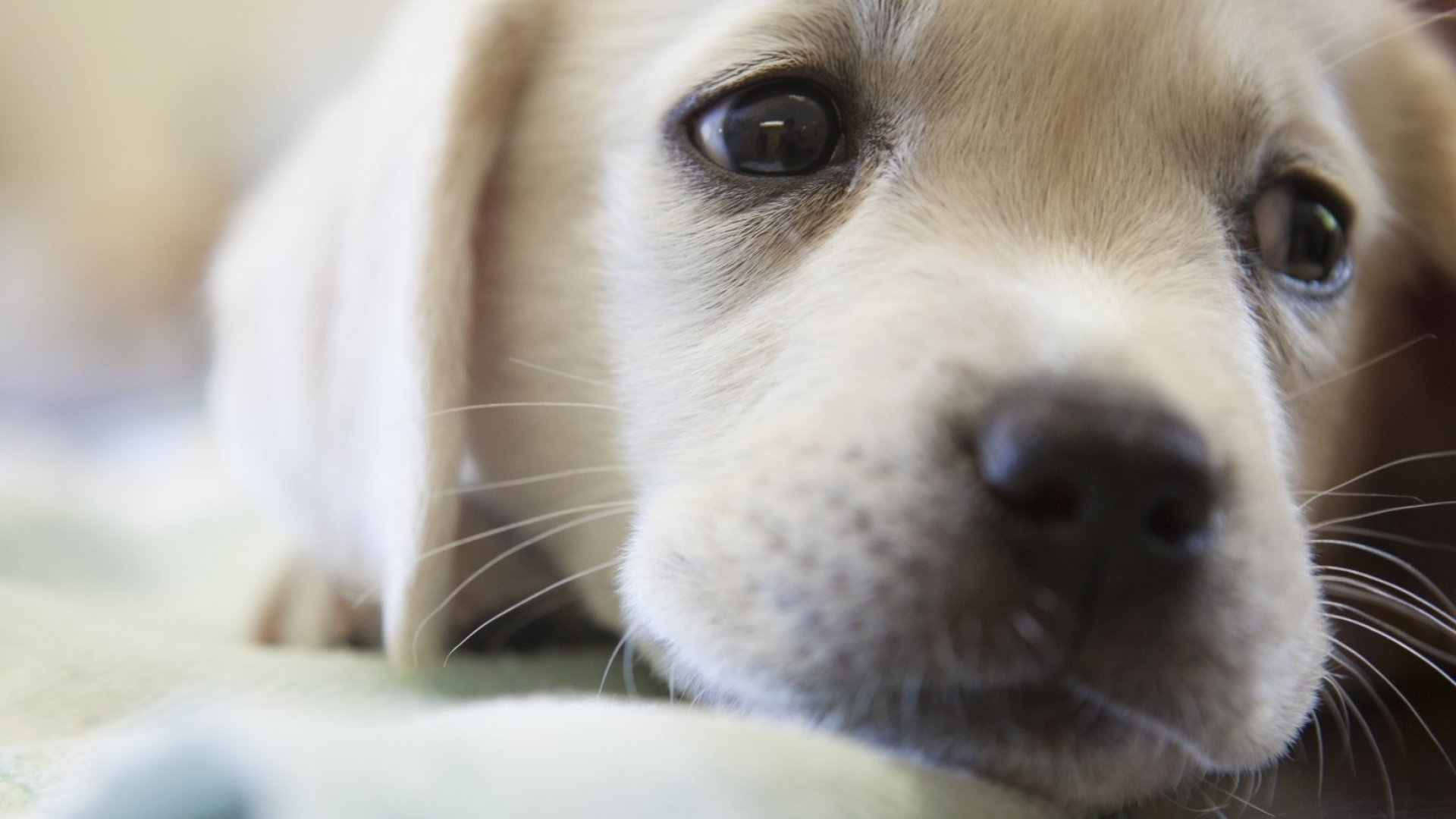 American Airlines Wins 'Cutest Excuse for Memorial Day Travel Disruption': Emergency Puppy Delivery