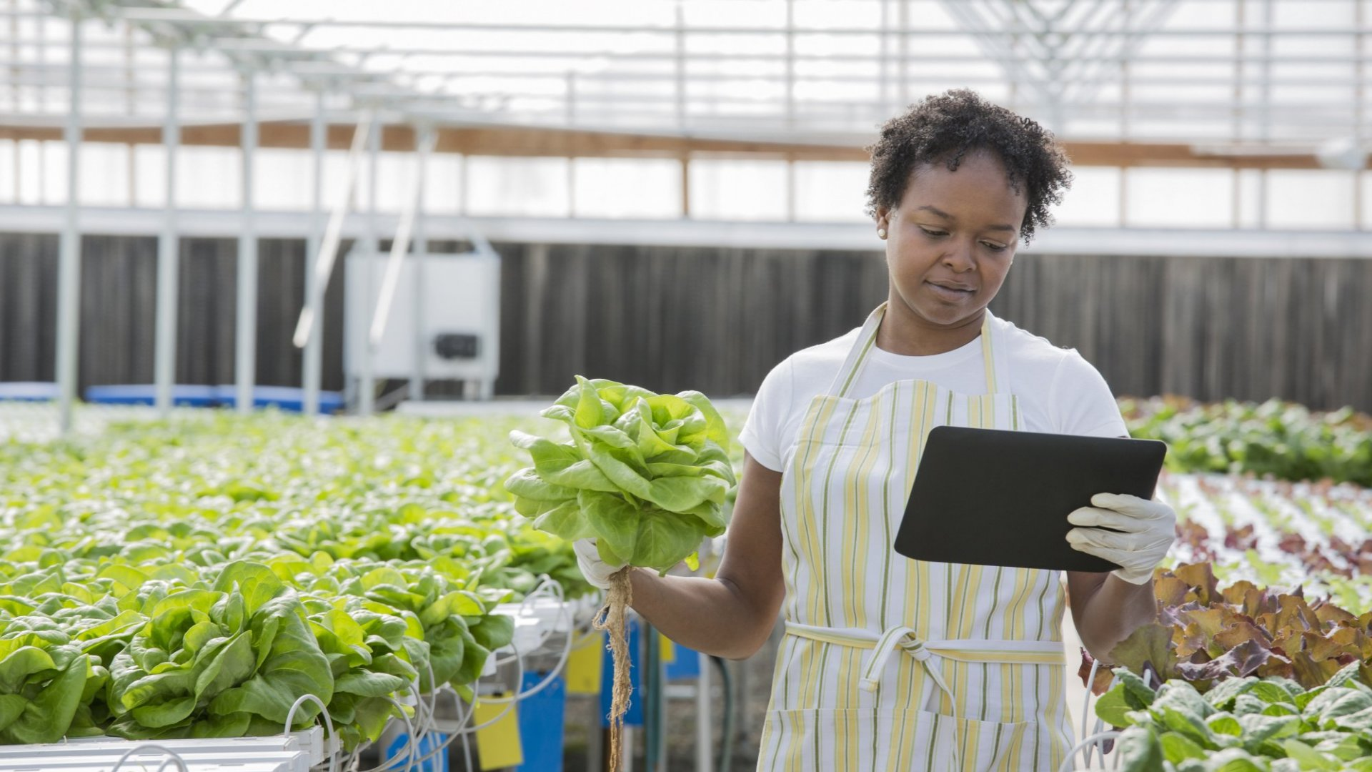 How Green Practices Make Your Business More Valuable to Buyers