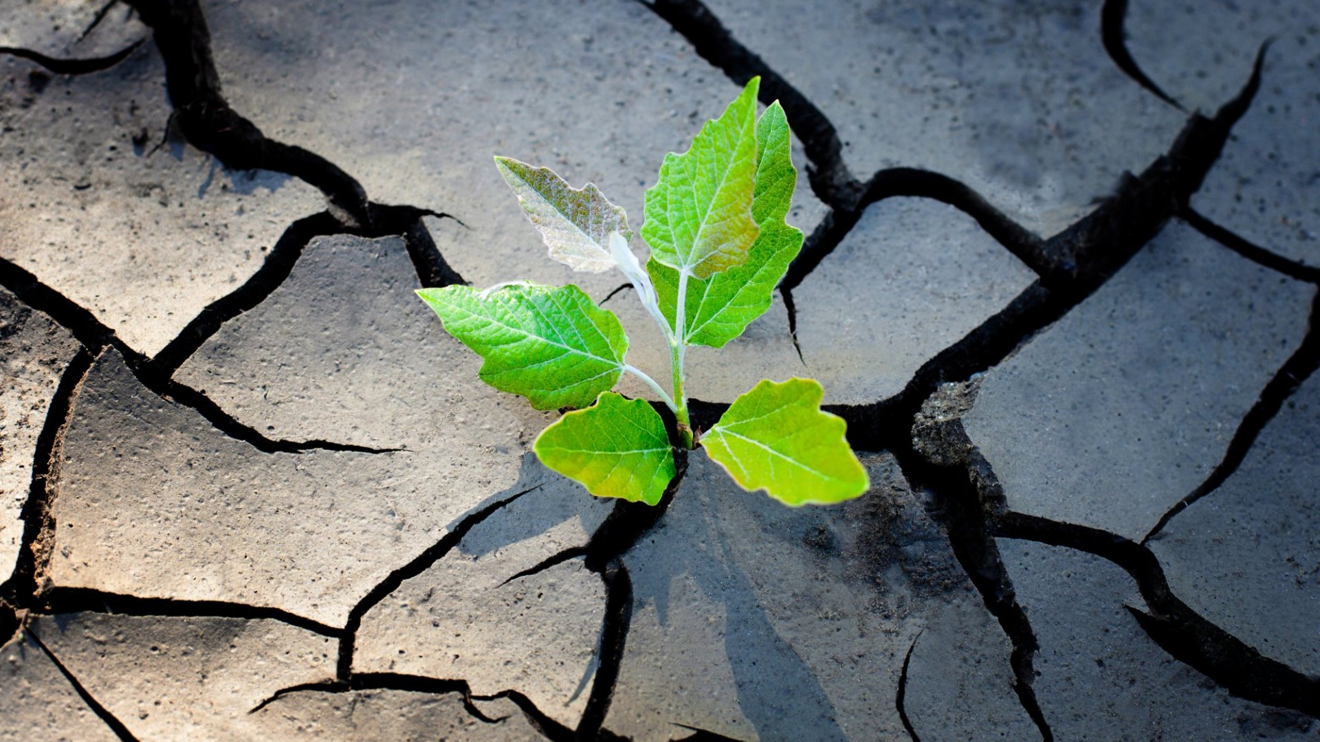 The Best Leaders Always Use These 5 Resilience-Boosting Strategies