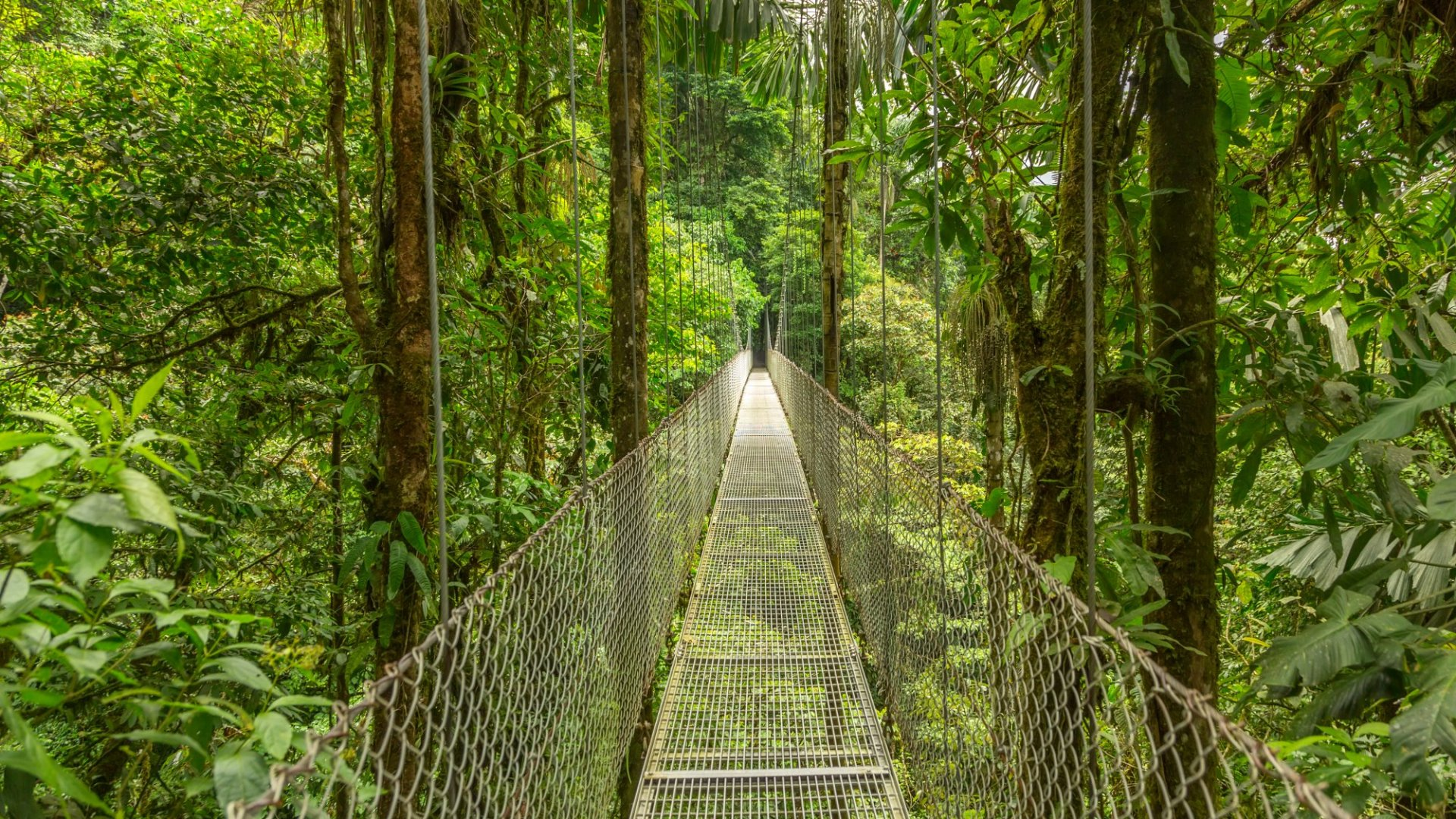 7 Entrepreneurial Lessons Gleaned from a Costa Rican Adventure