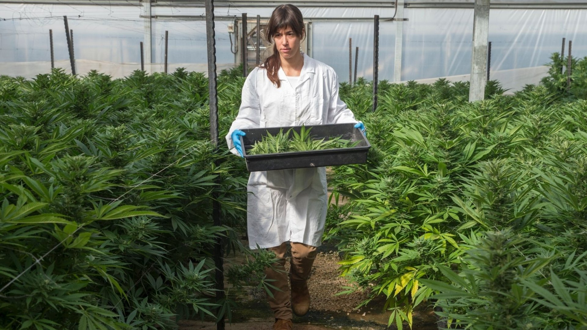 Forget the Spa This Mother's Day. Women With Young Kids Want  Weed