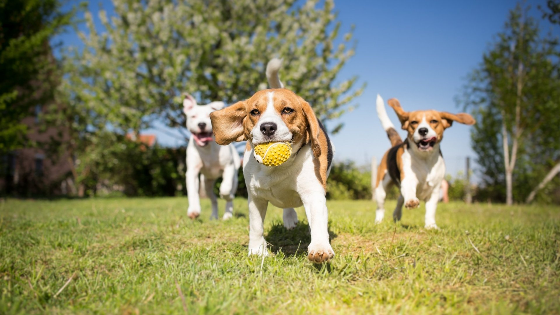 Open Innovation Is Alive and Well in the Pet Industry. Here's How to Get In on the Action