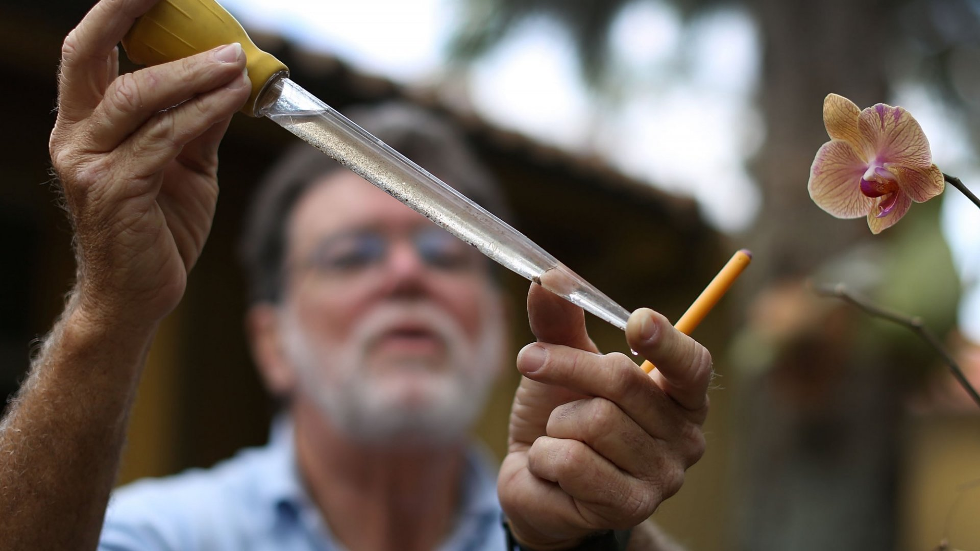 Examining mosquito larvae in Zika-affected Miami.