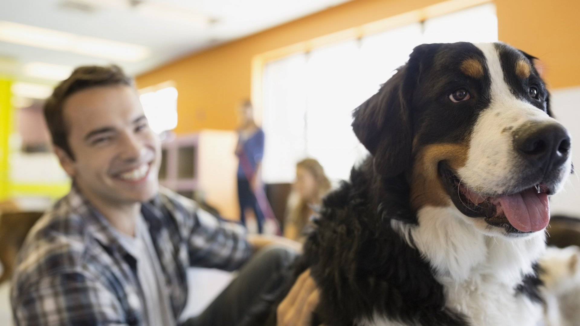 6 Reasons Why Allowing Your Dog to Come to Work Makes Perfect Business Sense