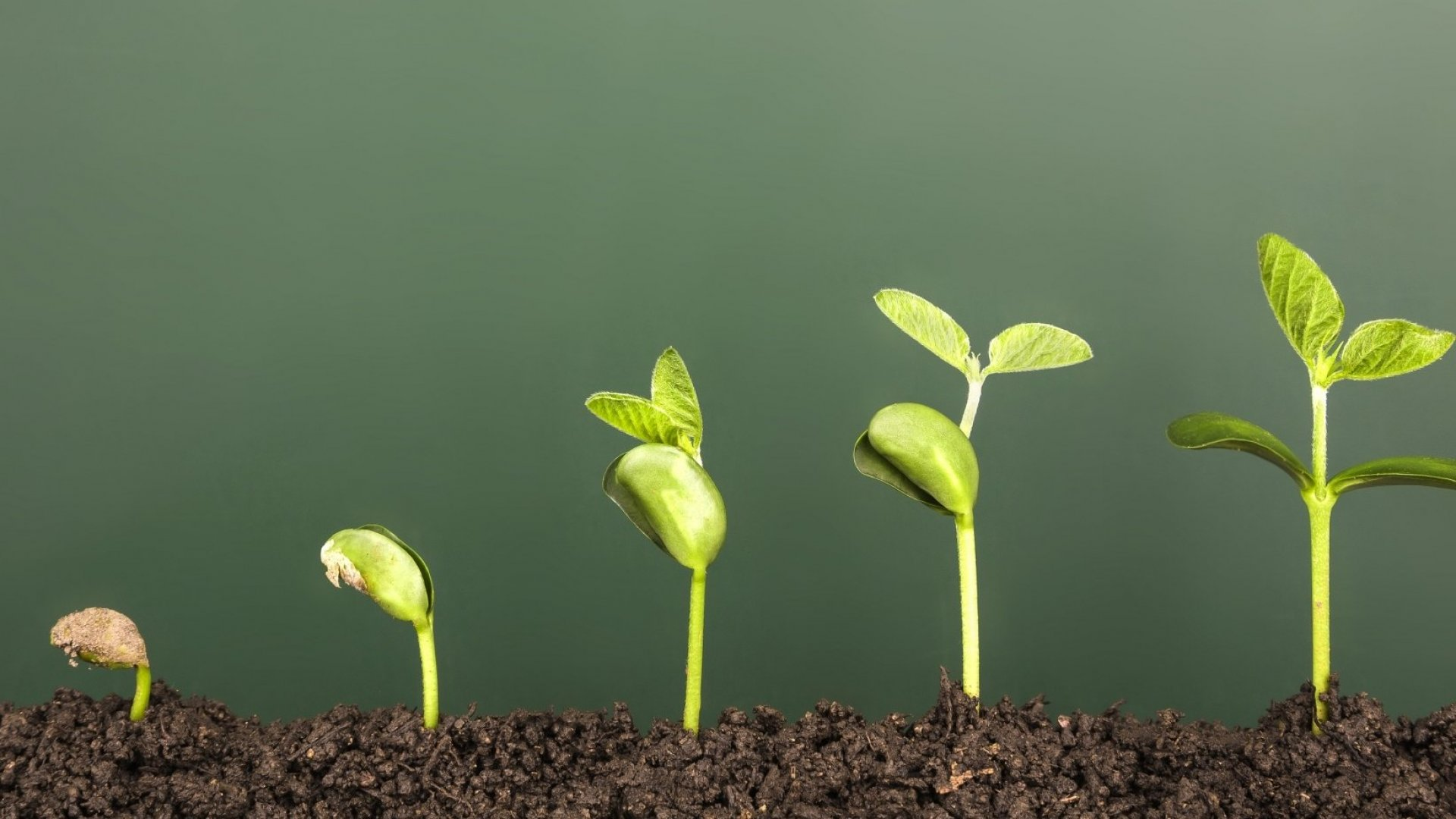 3 Things You Can Do to Boost Your Company's Growth