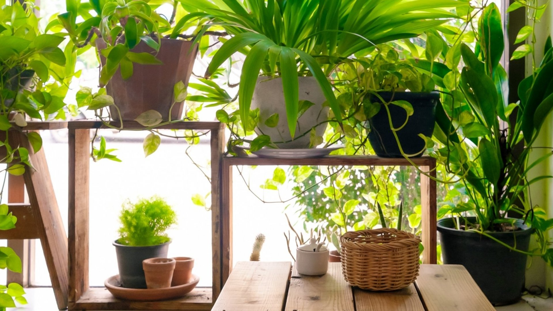 Doctors Are Now Prescribing Houseplants for Anxiety and Depression