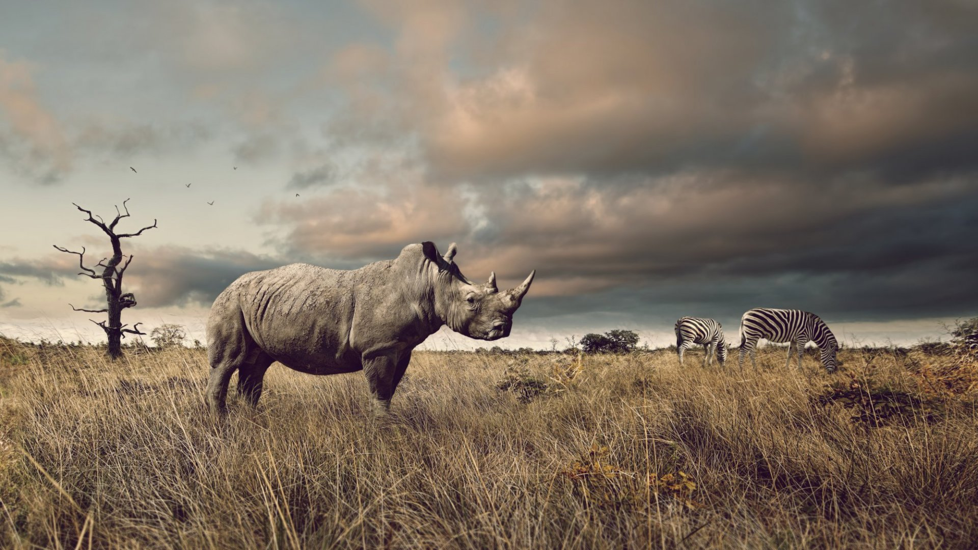If South Africa Legalizes Rhino Horn Trade, Drones Will Be Key to Conservation