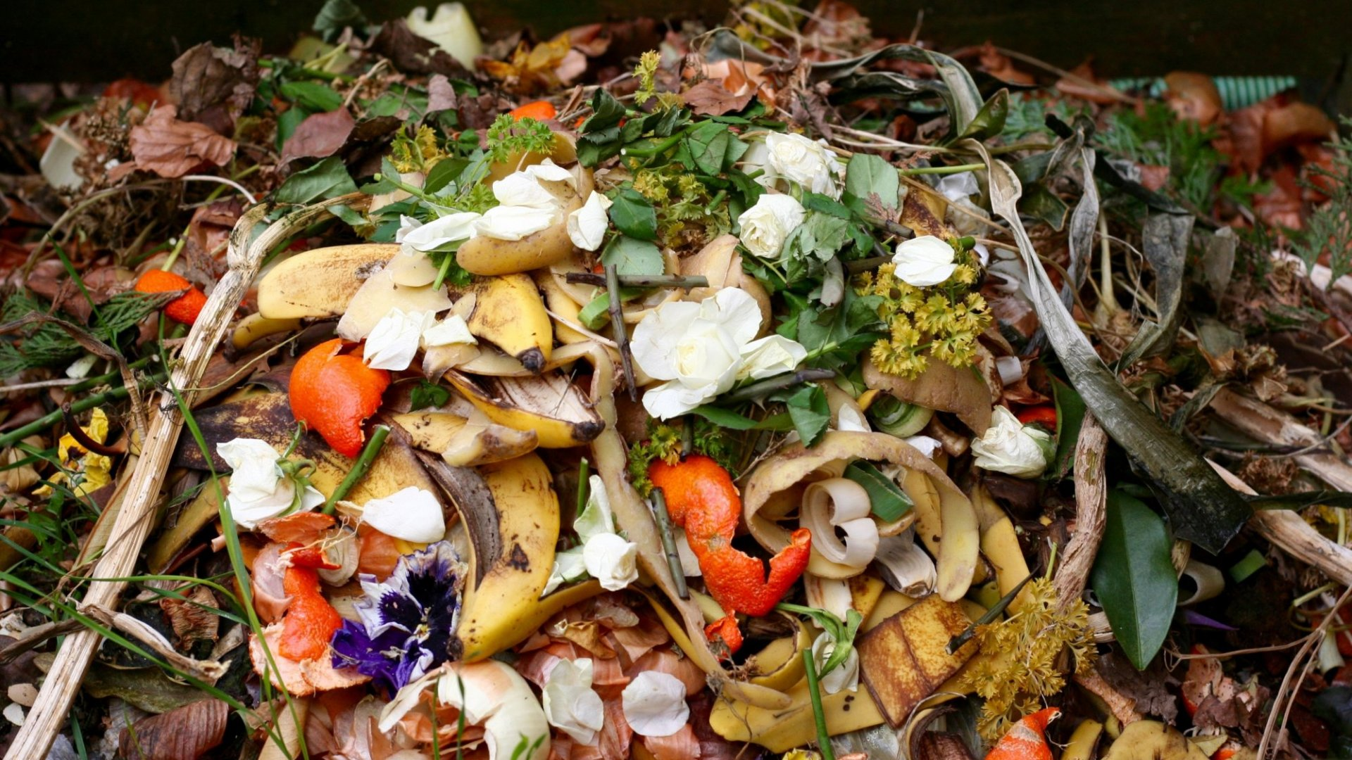 The Business Opportunity in Food Waste