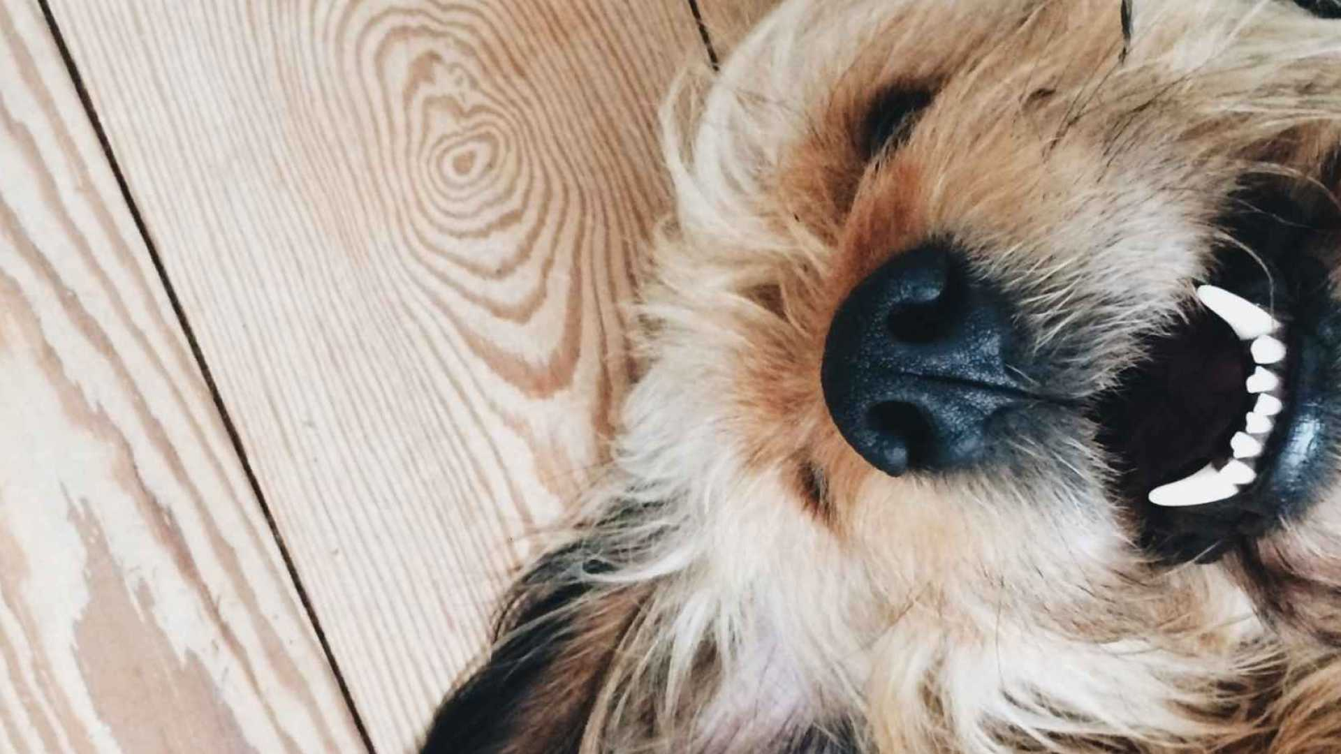 Why Dogs Hold The Secret to a Happy Life