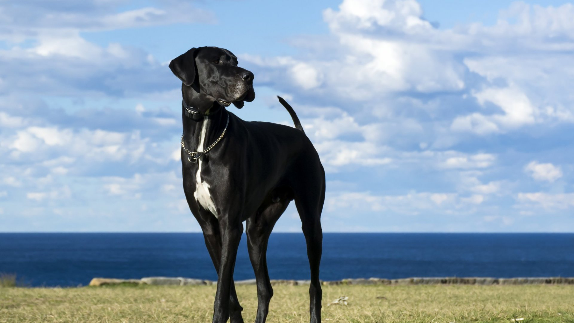 A Great Business Built on the Memory of a Beloved Great Dane