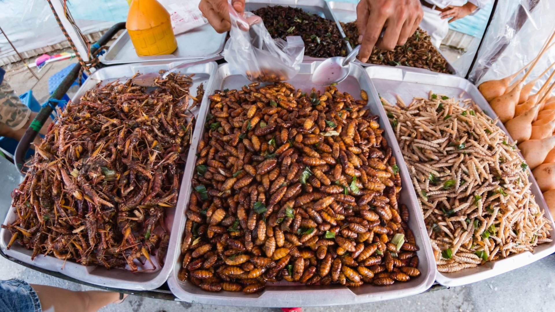 One Way to Make the Planet More Sustainable? Eat Bugs (Crickets, Specifically)