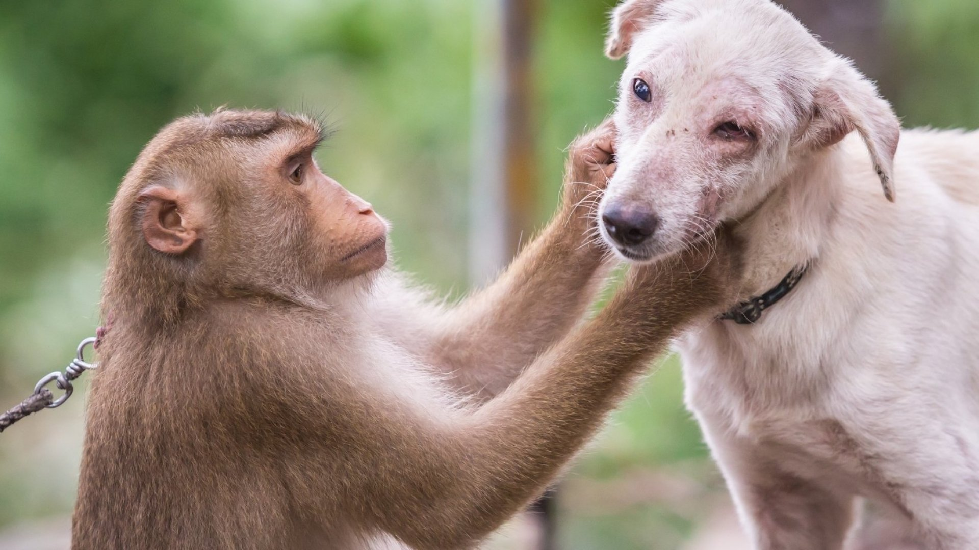 Emotions are complicated among us animals.