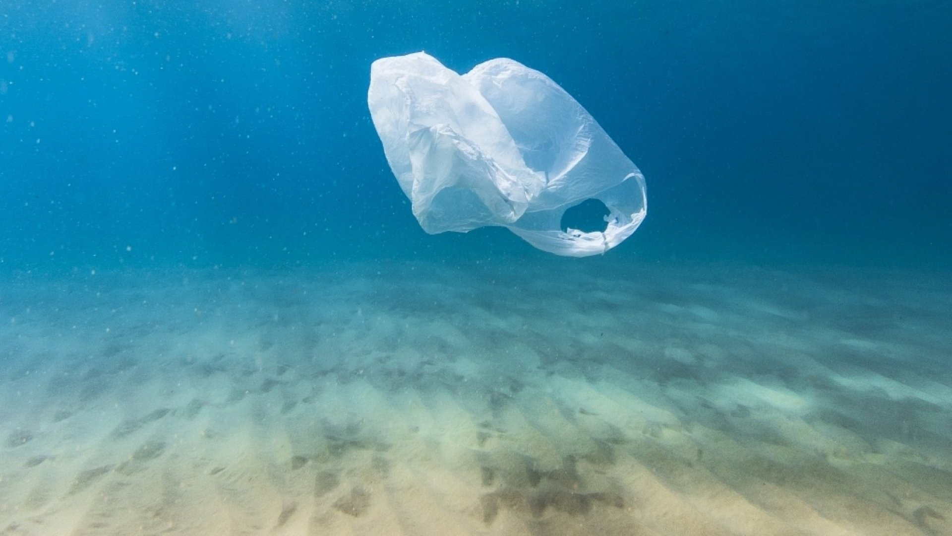 How Much Should a Plastic Bag Cost?