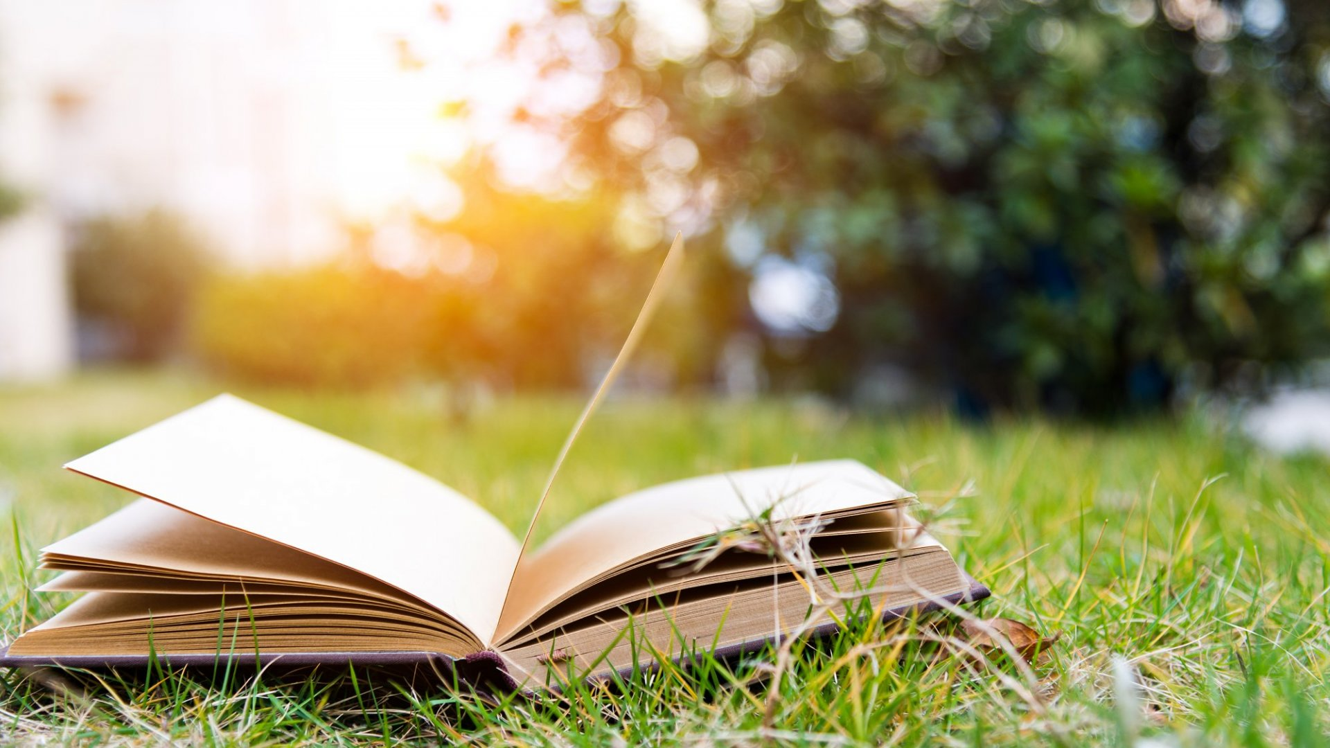 14 Books to Fuel Growth During the Dog Days of Summer