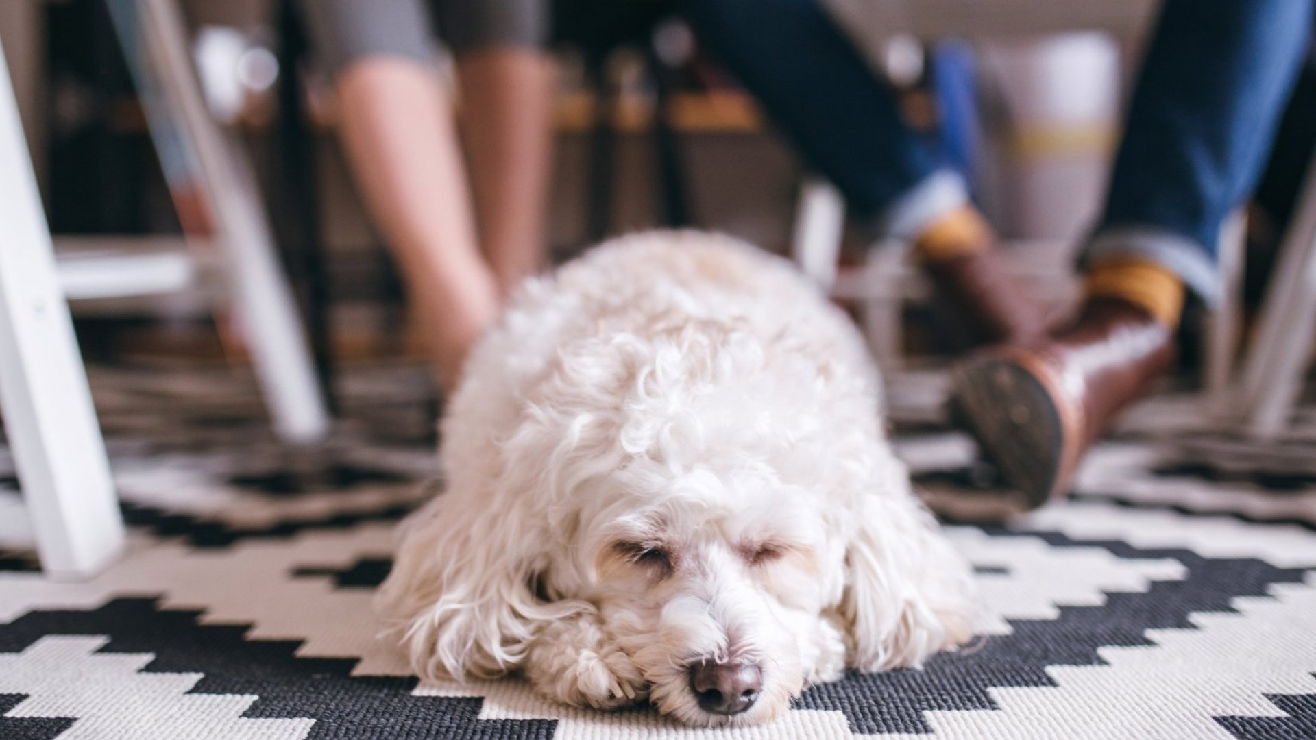 The Scientific Case for Dog-Friendly Offices