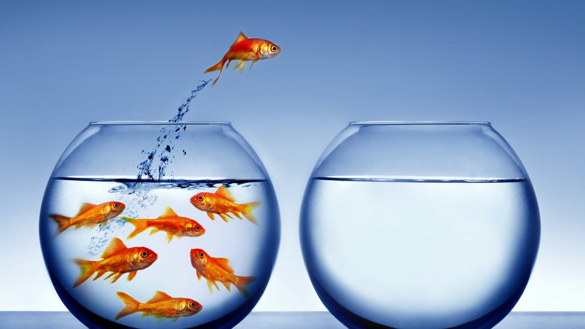 There's Something Fishy Going On in Your Work Culture -- or at Least There Should Be