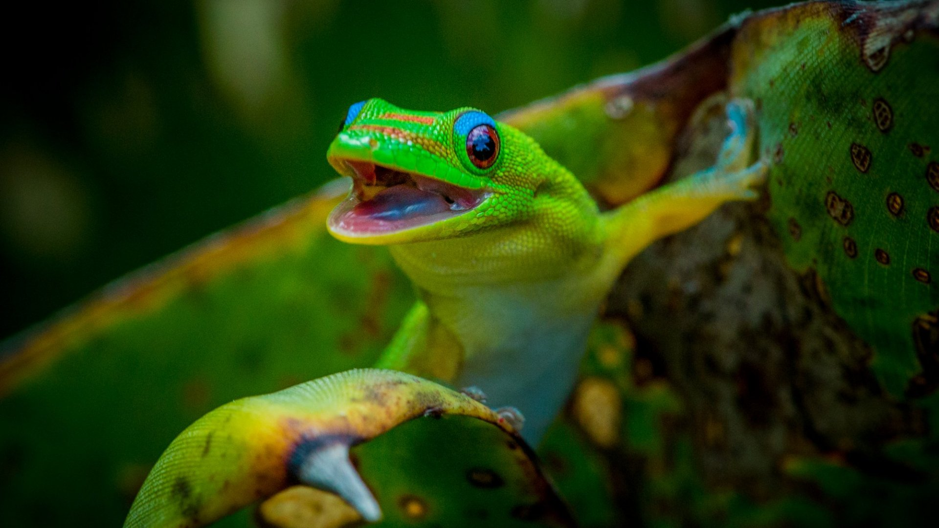 8 Characters Like the GEICO Gecko That Elevate Brand Recognition