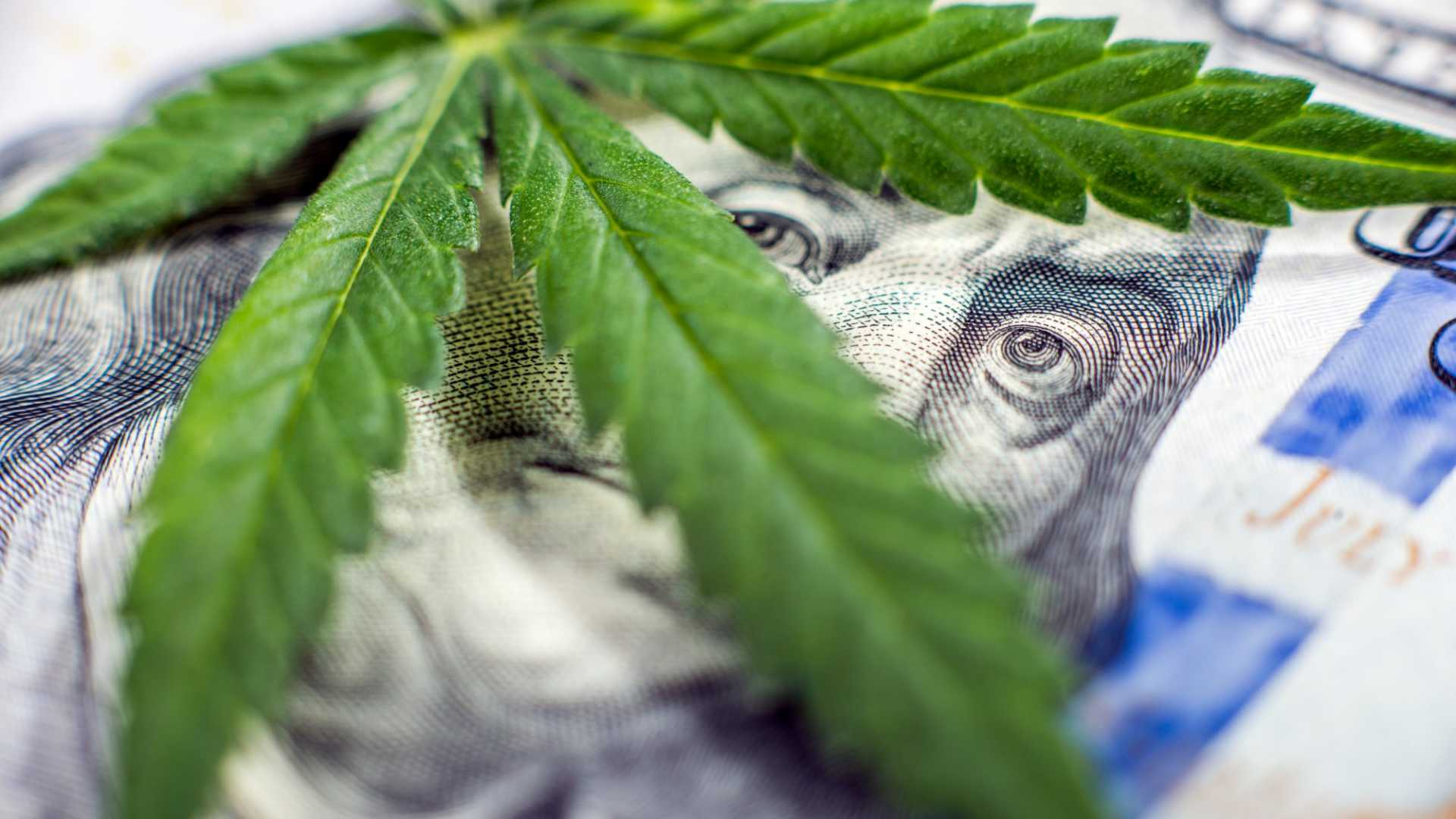 While Some Will Get Lucky, the Big Winners in Cannabis Will Take These 4 Pieces of Advice From the Experts