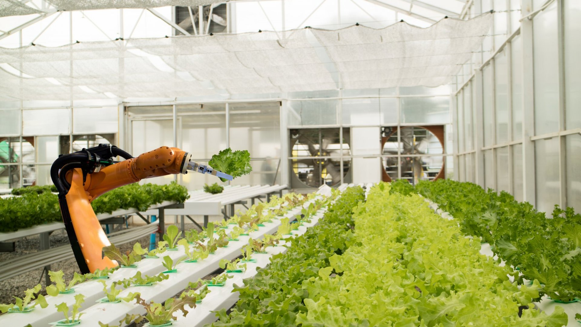 Are Robots the Future of Farming?
