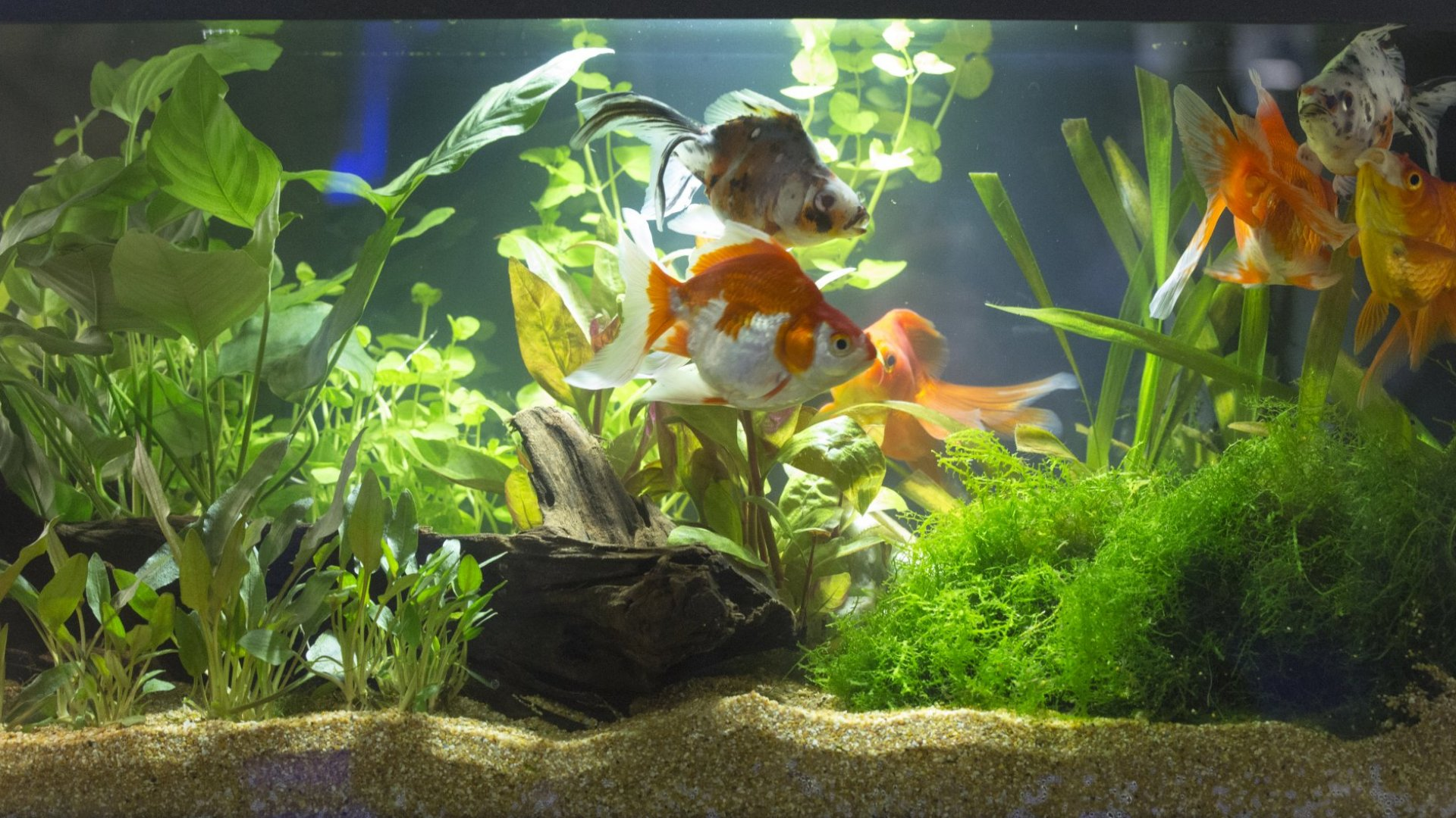 A Fish Tank Full of Sexual Harassment? Why Diversity Helps