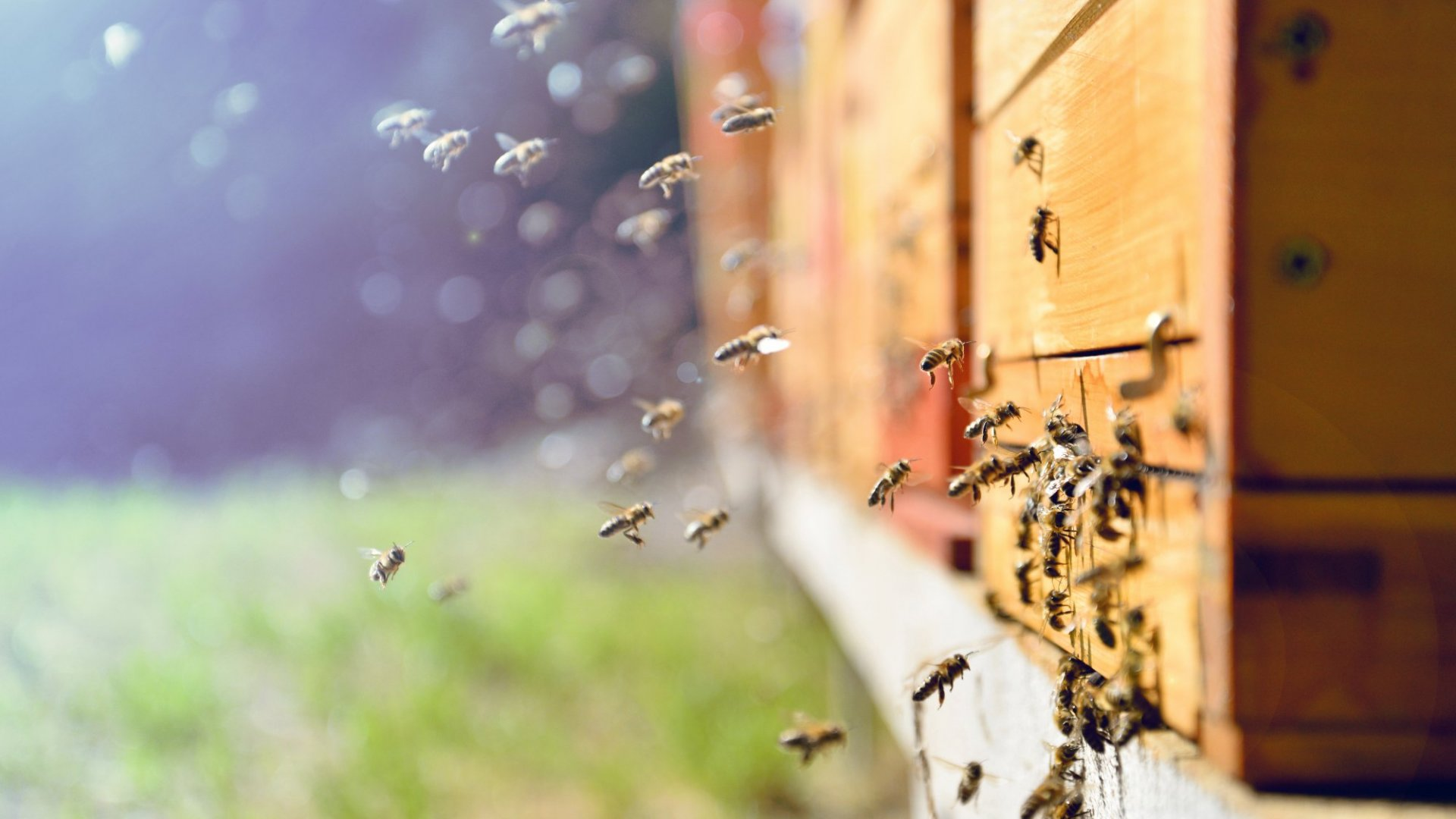 How Teamwork is Like a Beehive (But There's No Queen Bee)