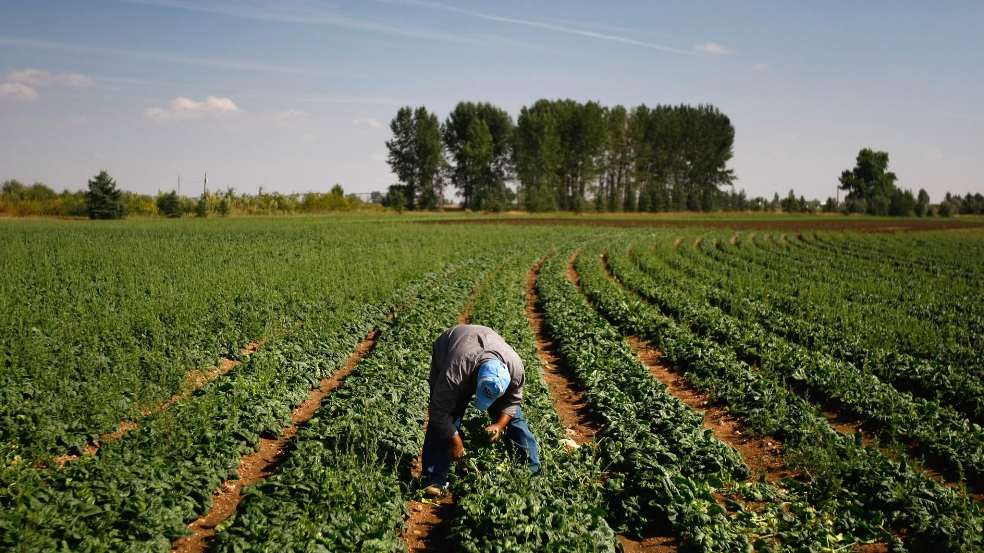 How Big Data Is Disrupting U.S. Farming