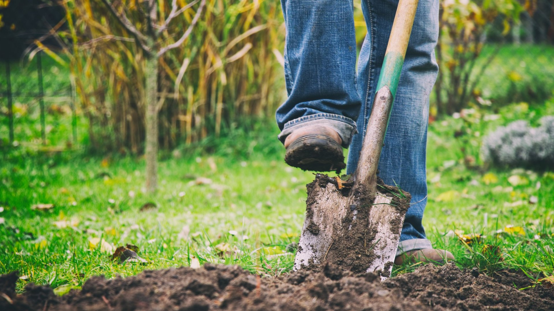 4 Ways Gardening Improves Your Performance