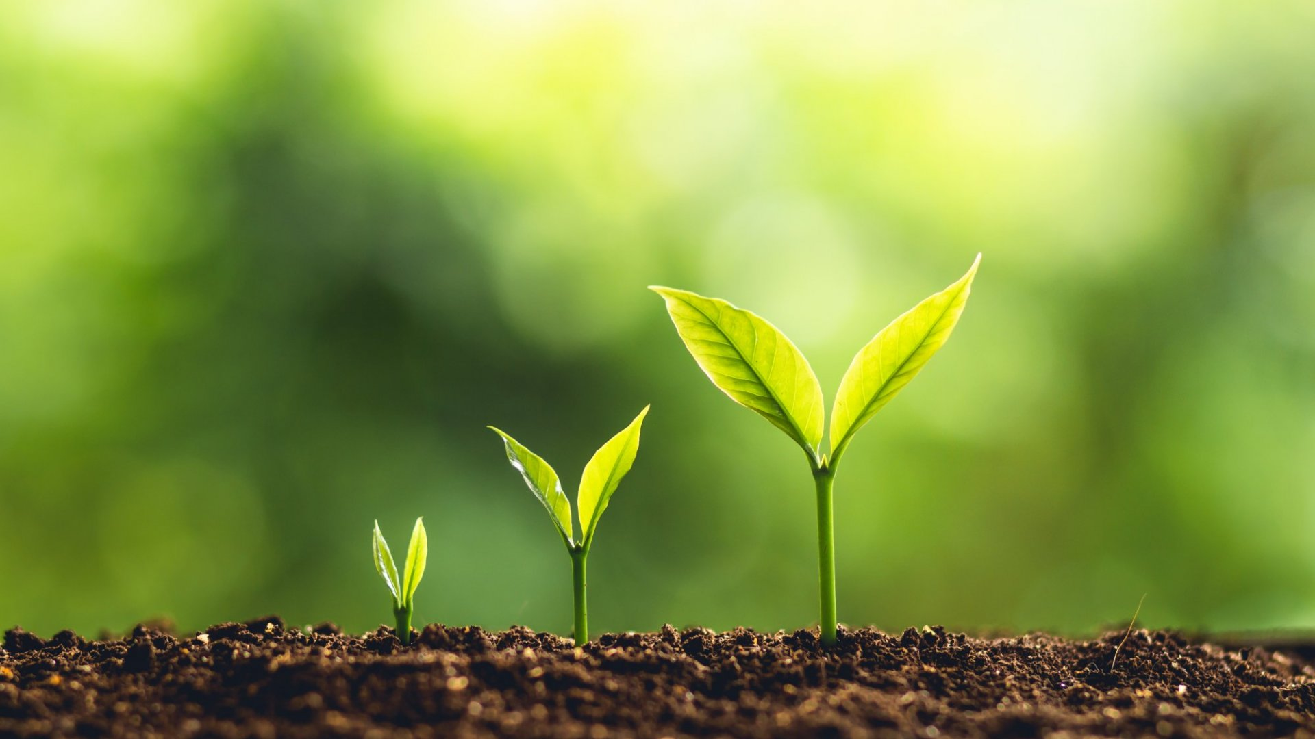 Why Sustainable Growth Is the Right Formula for Startup Success