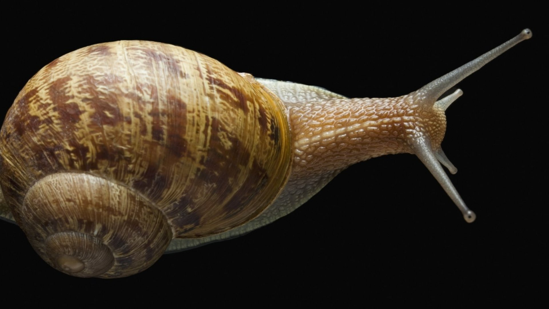 Want to Remember More? This Snail Study Shows 1 Thing Will Help You Retain Information