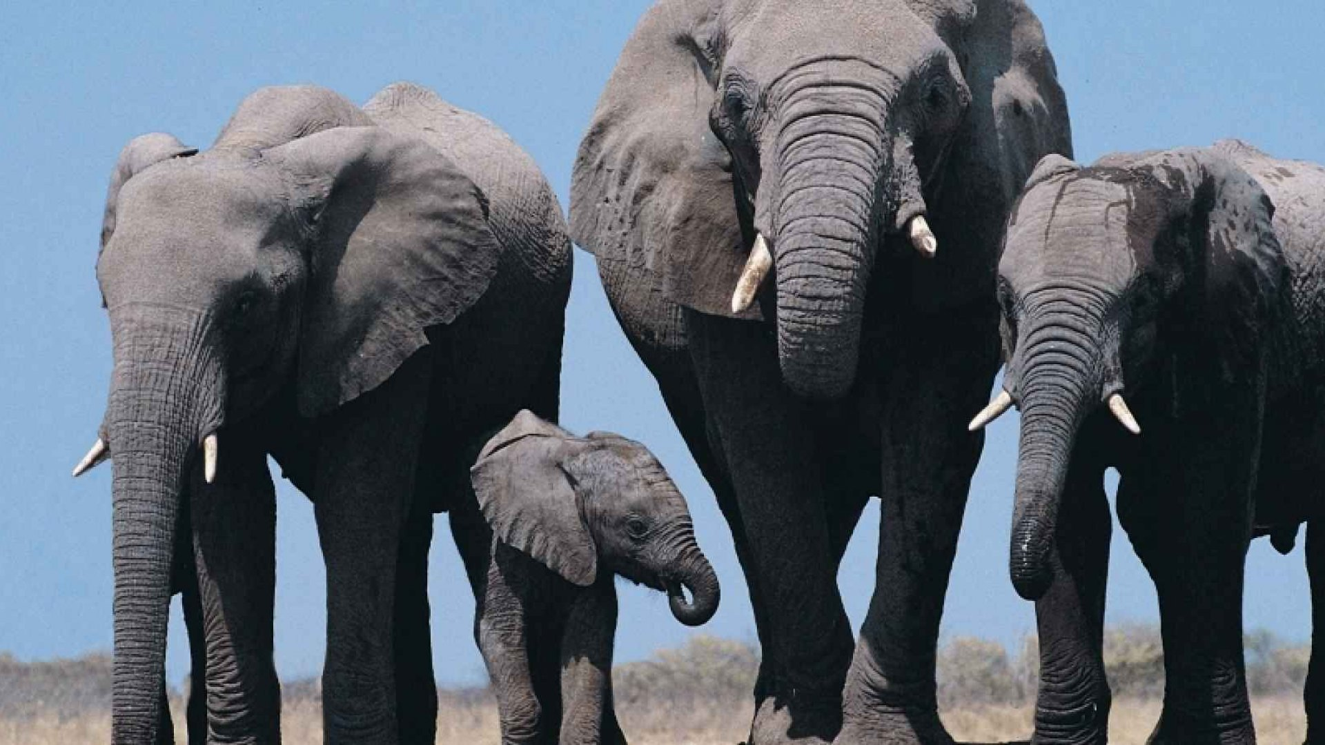 From Idea to Market Reality: Making an Elephant Surf