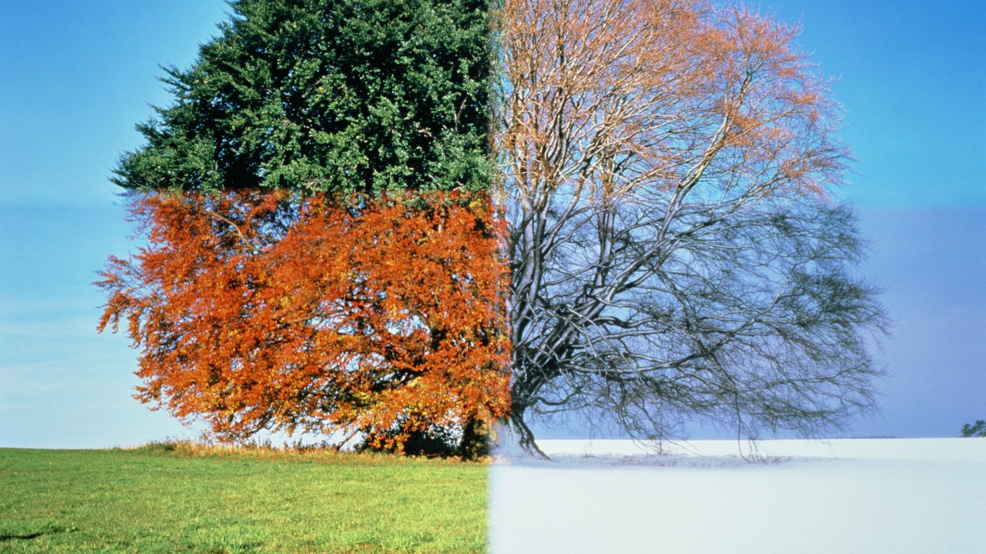 6 Marketing Tips for Seasonal Businesses (Before, During, and After Peak Season)