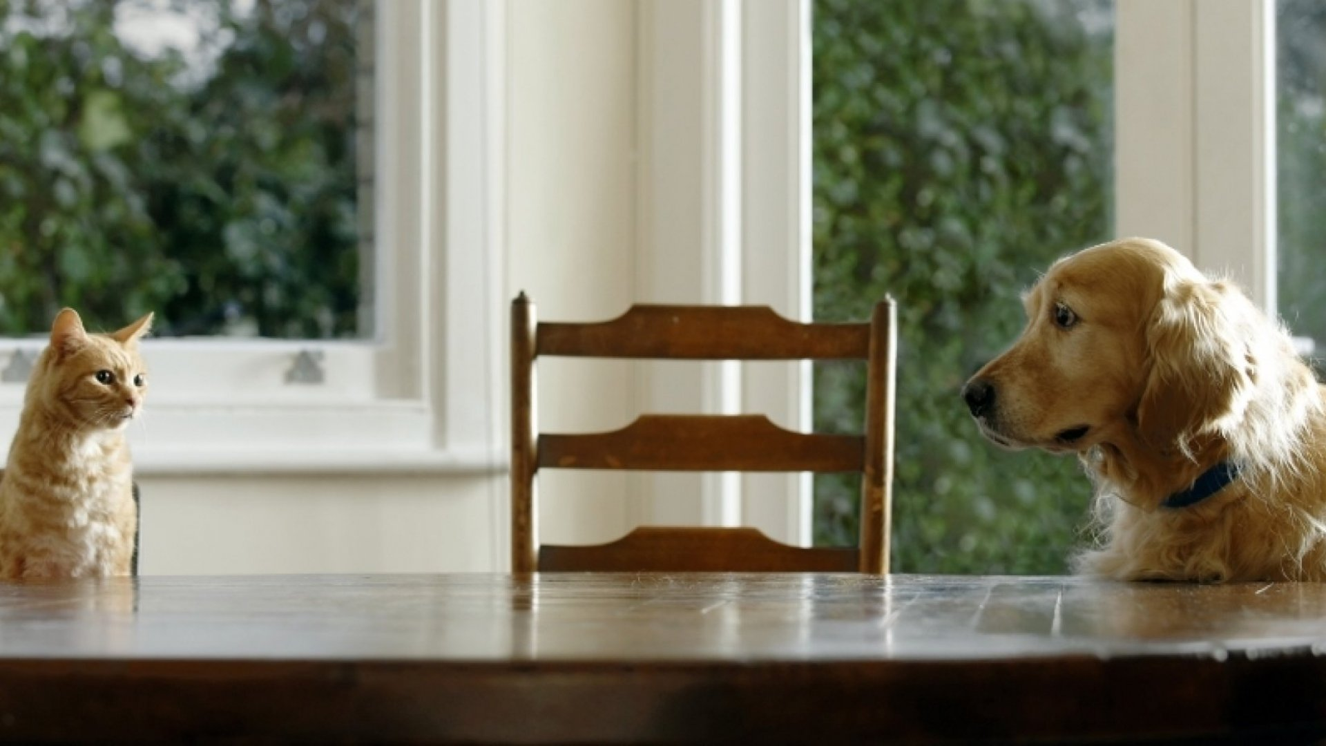 Fighting Over Fido: Conflict Resolution Tactics From The Pet Mediator