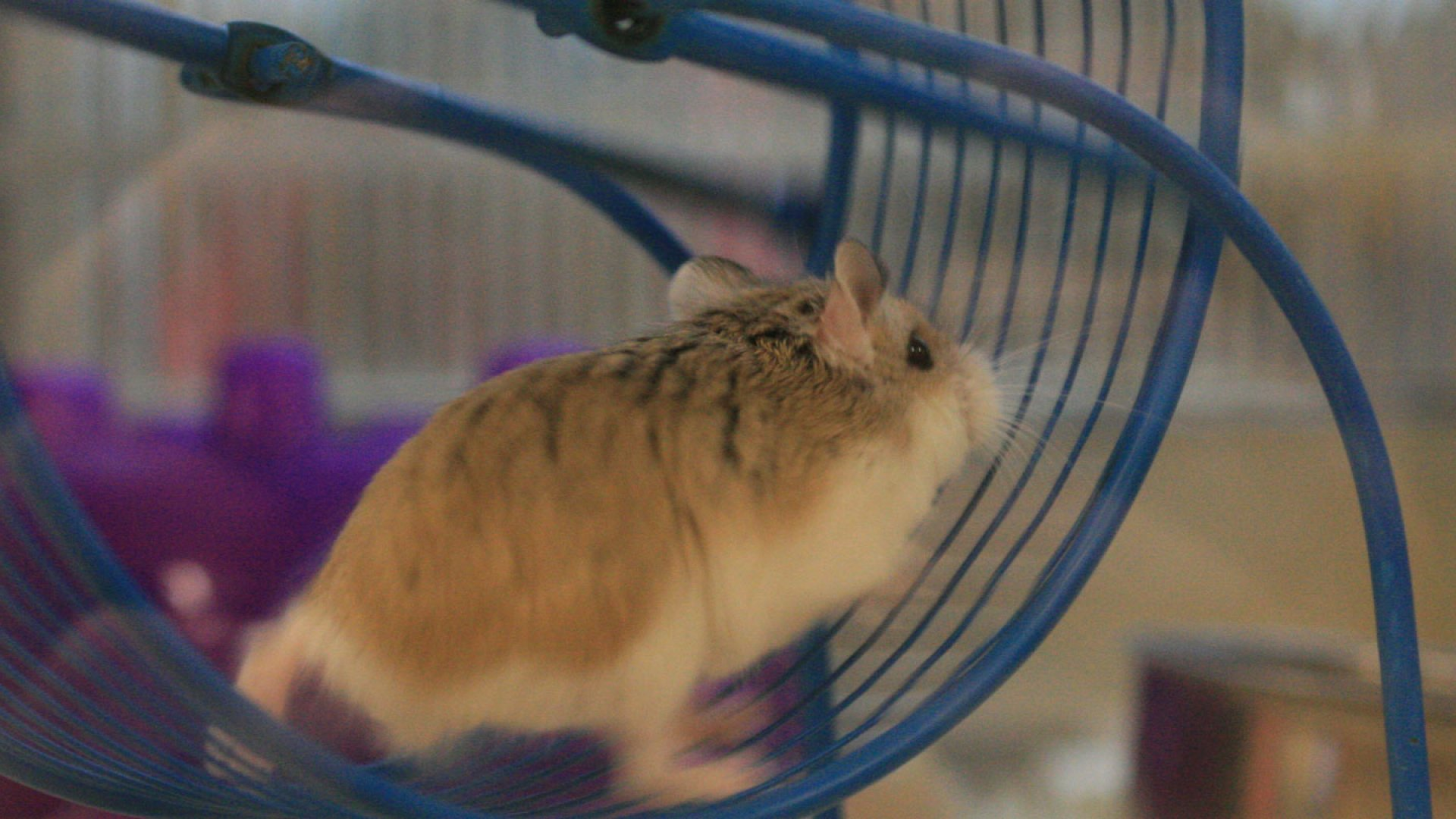 3 Ways to Win the RFP Rat Race