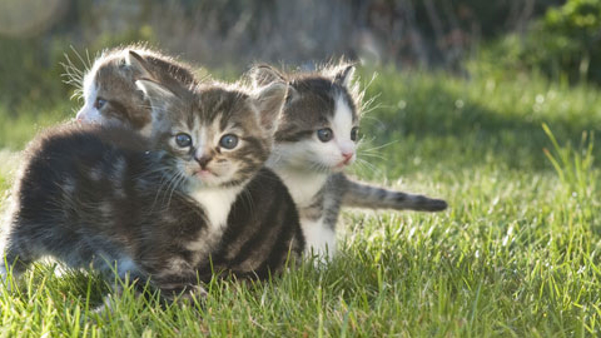 Managing Angel Investors: It's Like Herding Cats
